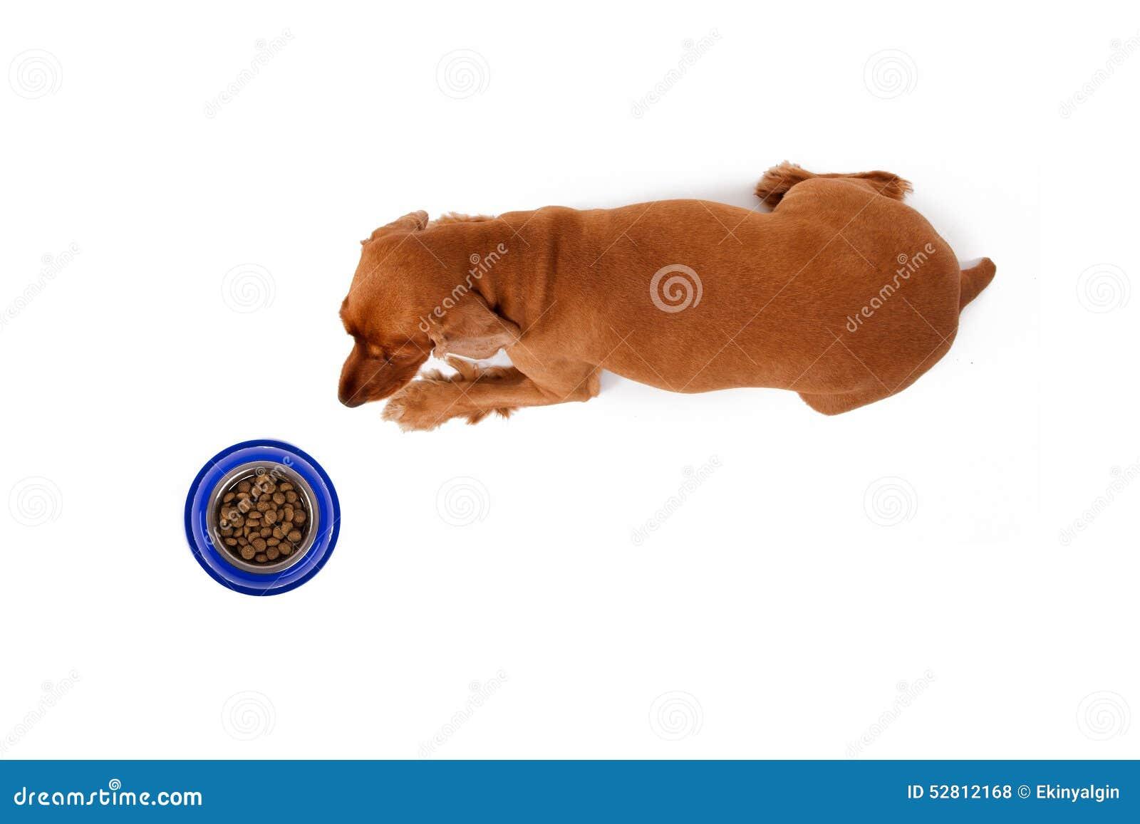 Dog Food Web Site