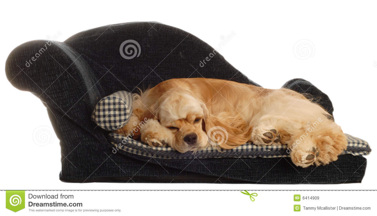 Dog Laying In Bed