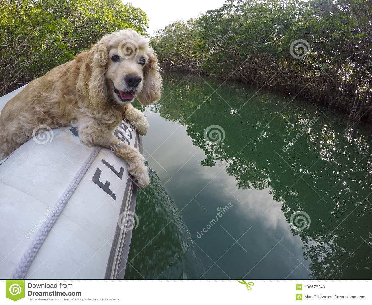 Boat dog takes a dinghy ride