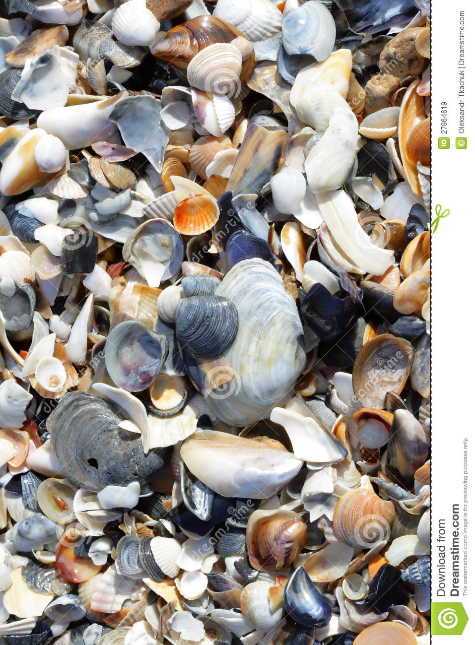 Cockleshells