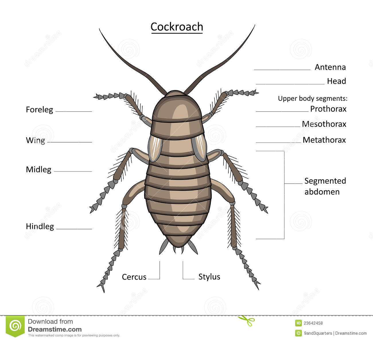 Life Cycle Of A Wolf Spider Diagram Free Wiring Diagram For You
