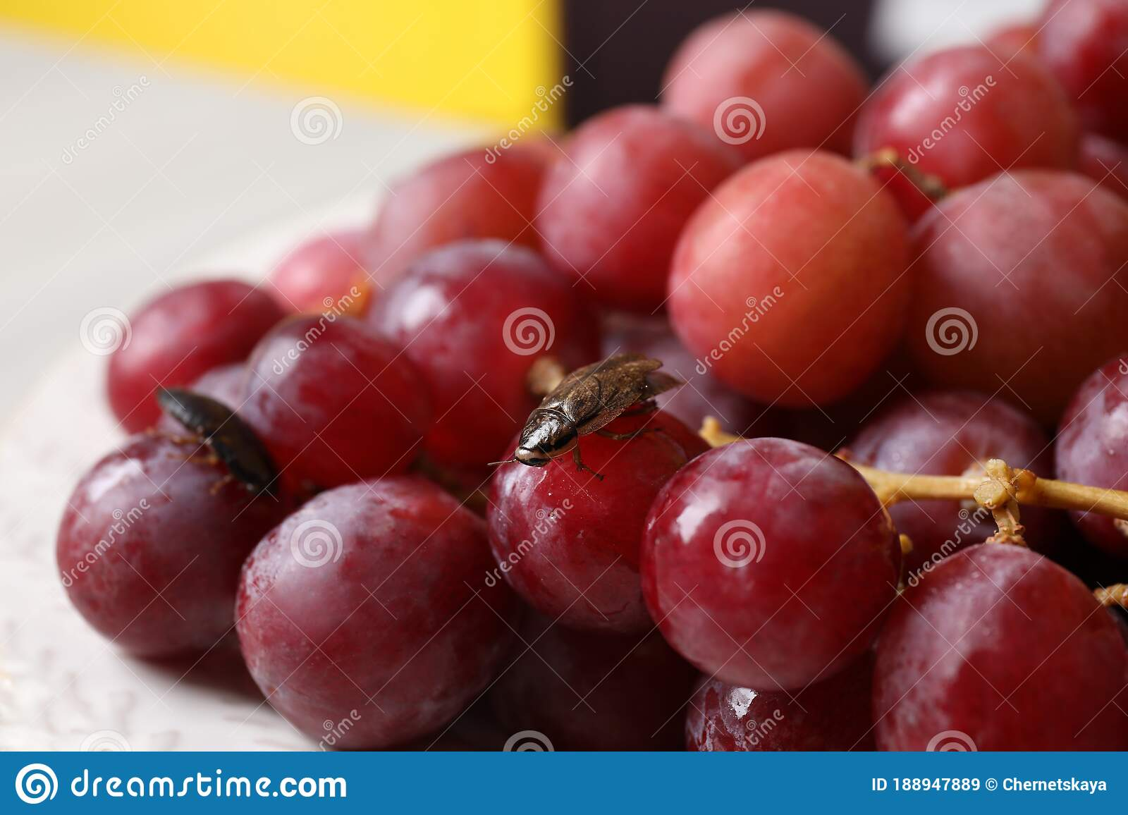 Cockroach On Grapes In Kitchen Pest Control Stock Image Of Harmful Disease 188947889