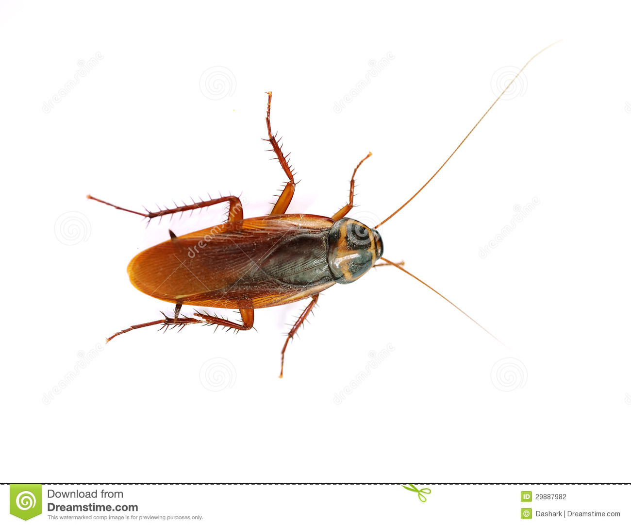 Cockroach Stock Photography - Image: 29887982