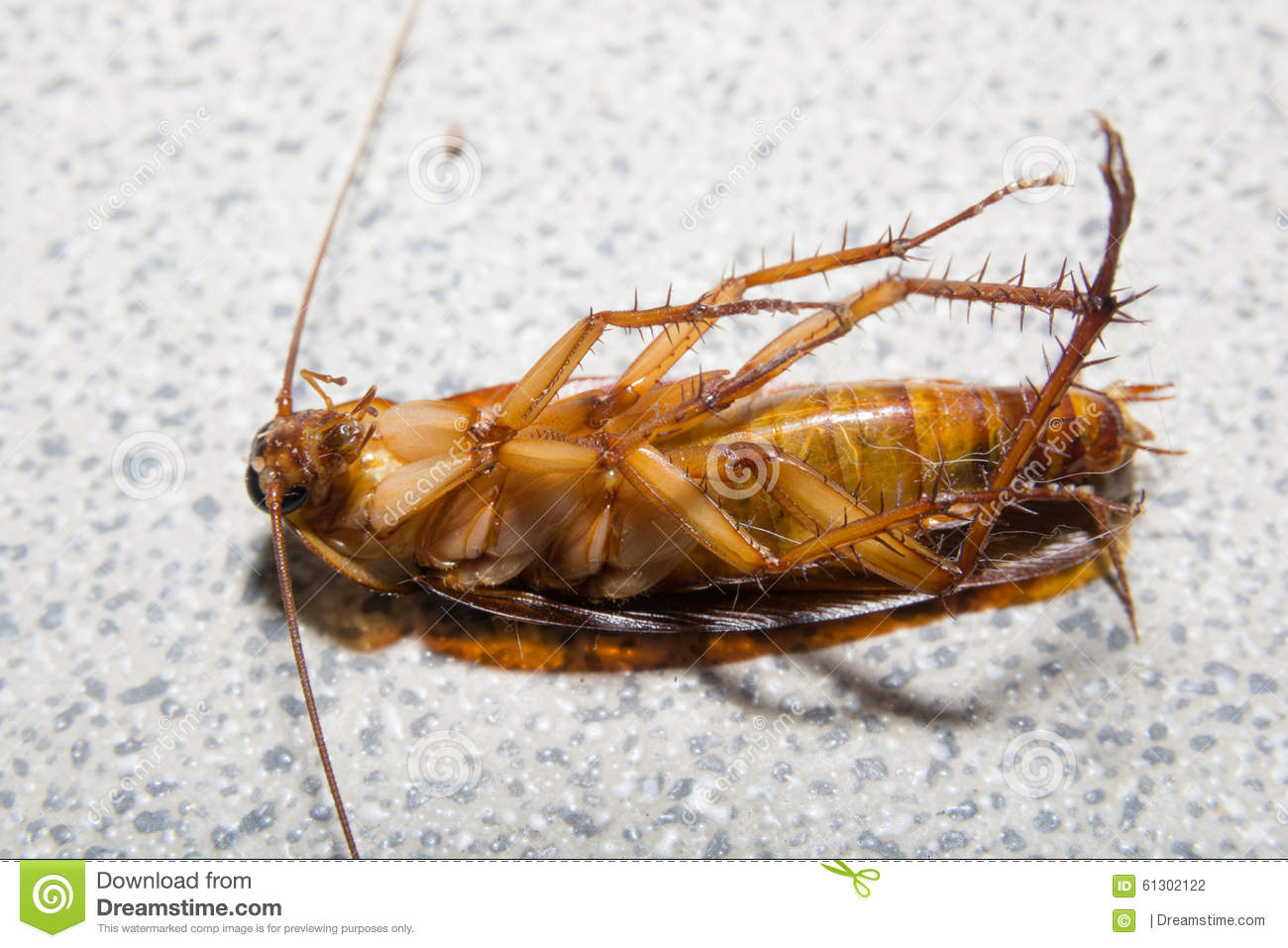 Dreams of cockroaches in hair