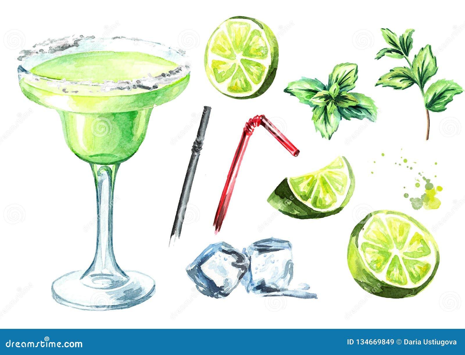 Cocktail de margarita avec des éléments de décor chaux, menthe et glaçons Illustration tirée par la main d aquarelle, d isolement