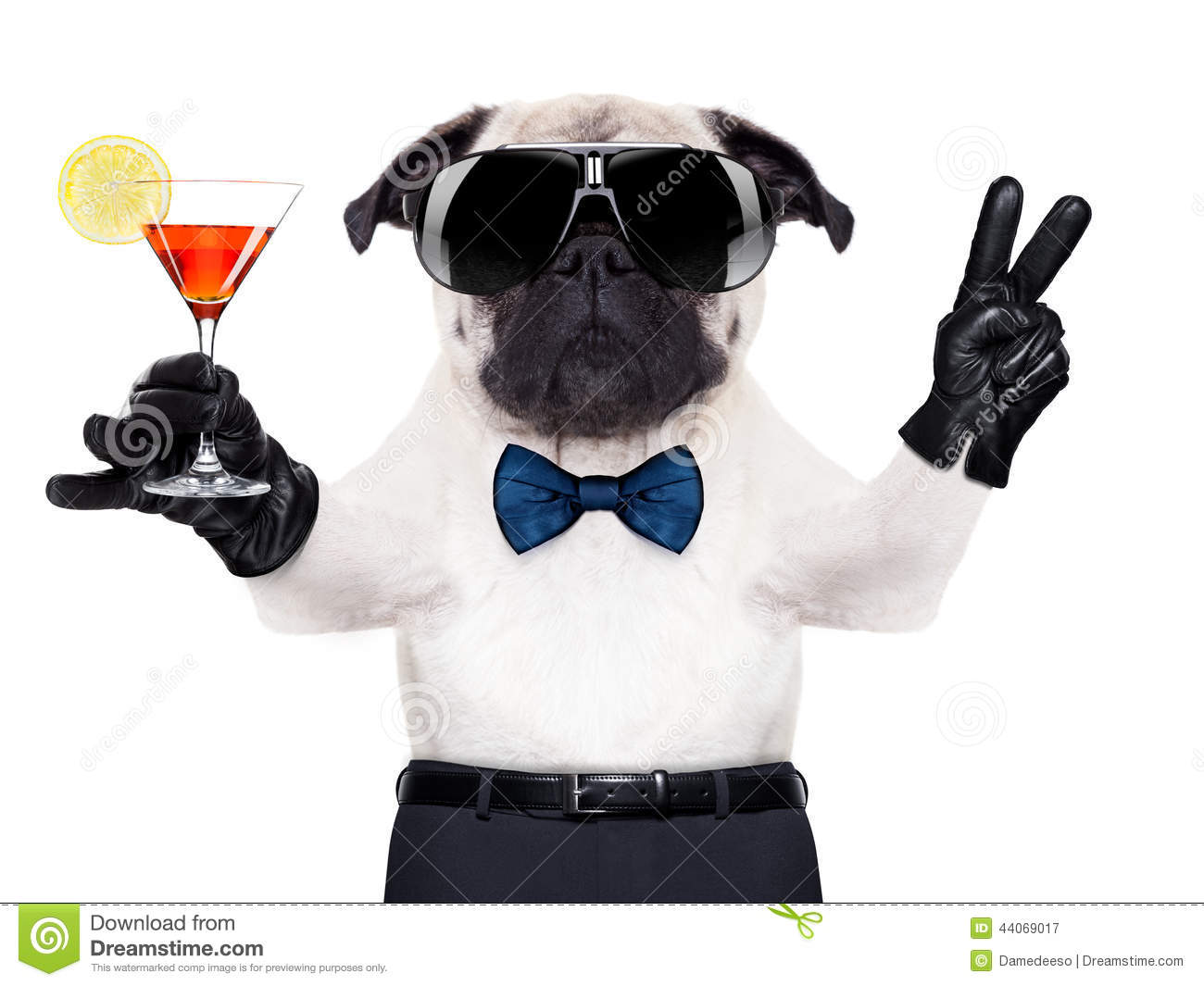 Cocktail Dog Stock Image Image Of Humor Beverage Boxer