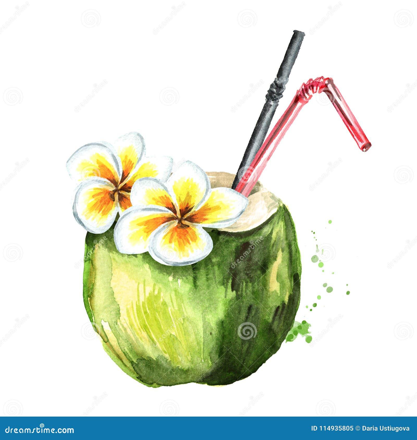 Cocktail fresco tropicale della noce di cocco decorato con il fiore Illustrazione disegnata a mano dell acquerello isolata su fon