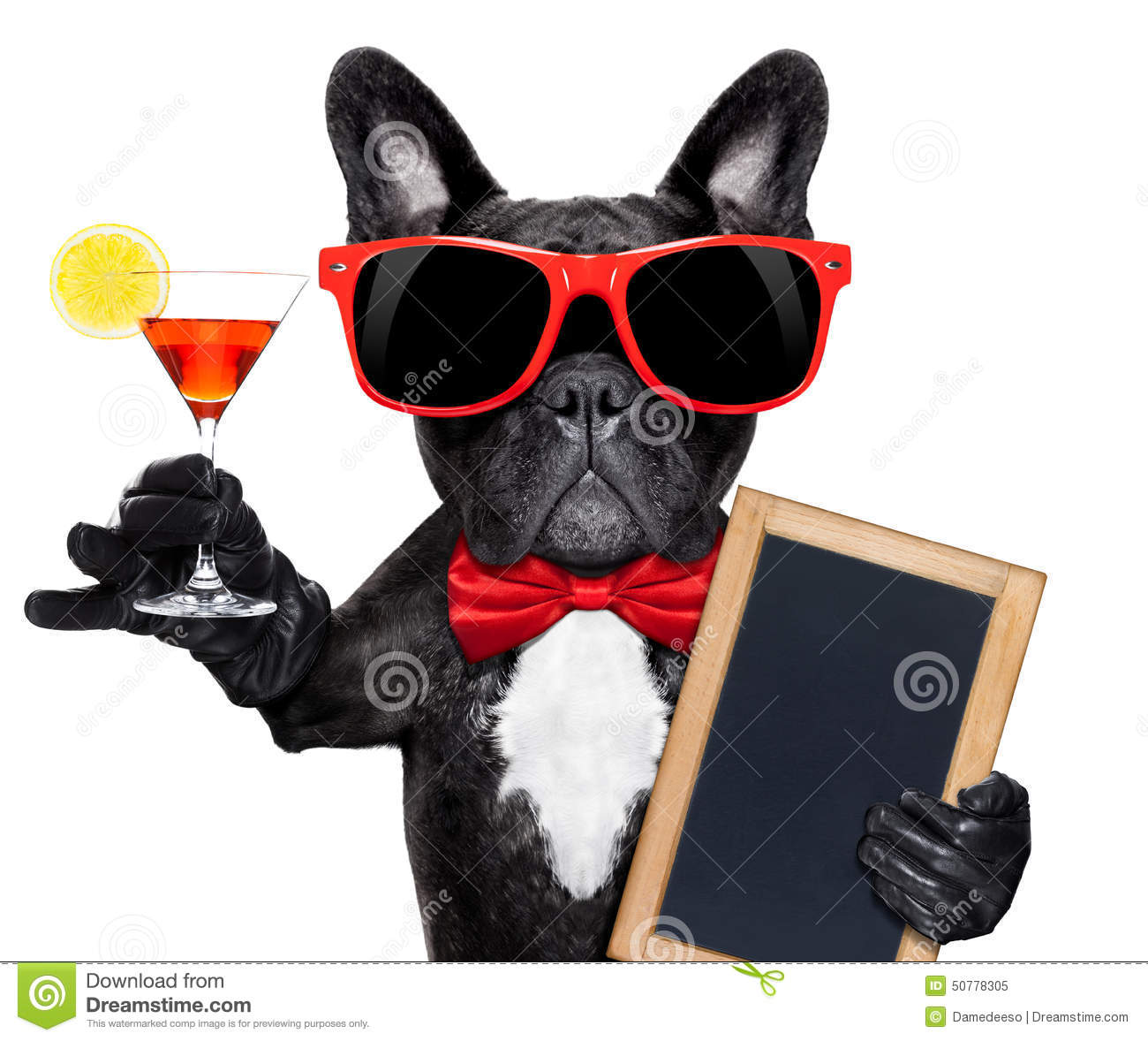 Cocktail Party Dog Stock Photo Image 50778305