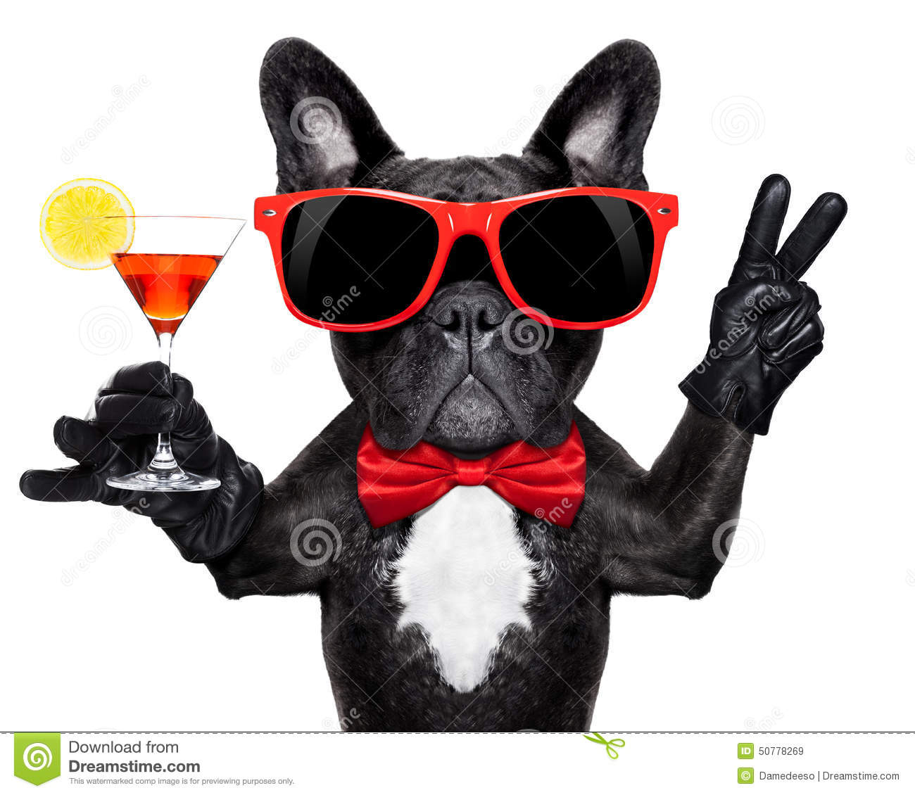 cocktail party dog stock photo image 50778269 french bulldog clipart free gray and white french bulldog clipart black and white