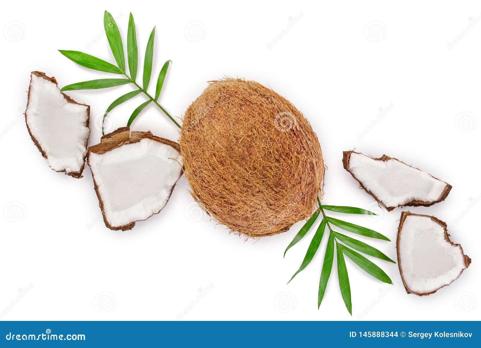 Coco con las hojas aisladas en el fondo blanco con el espacio de la copia para su texto Visi?n superior Endecha plana