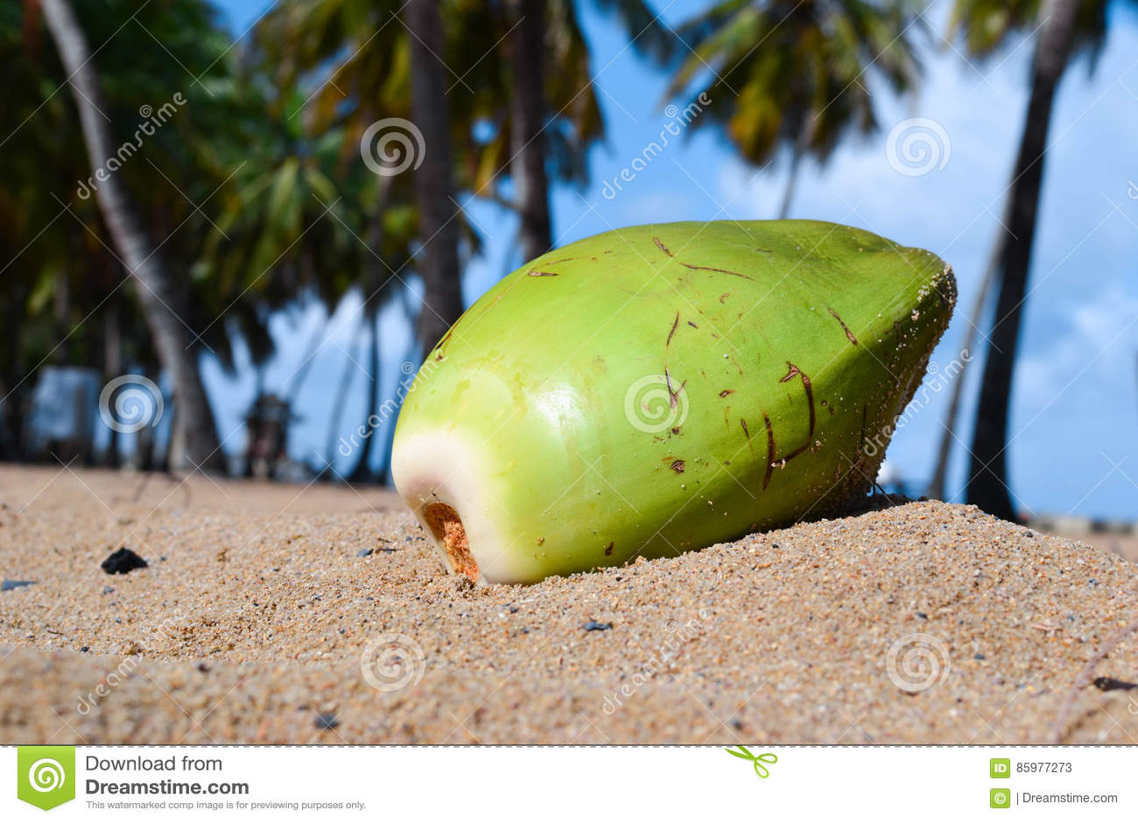 Coco en la playa de Puerto Rico