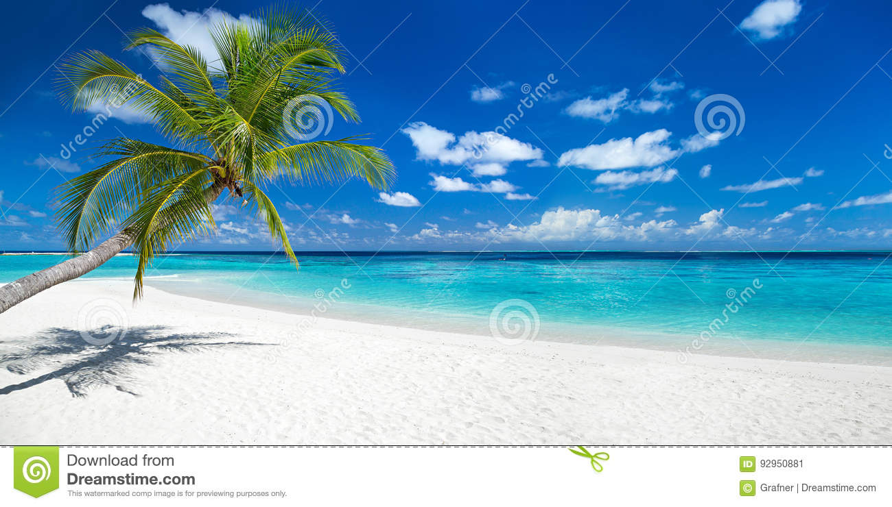 Coco palm on tropical paradise panorama beach