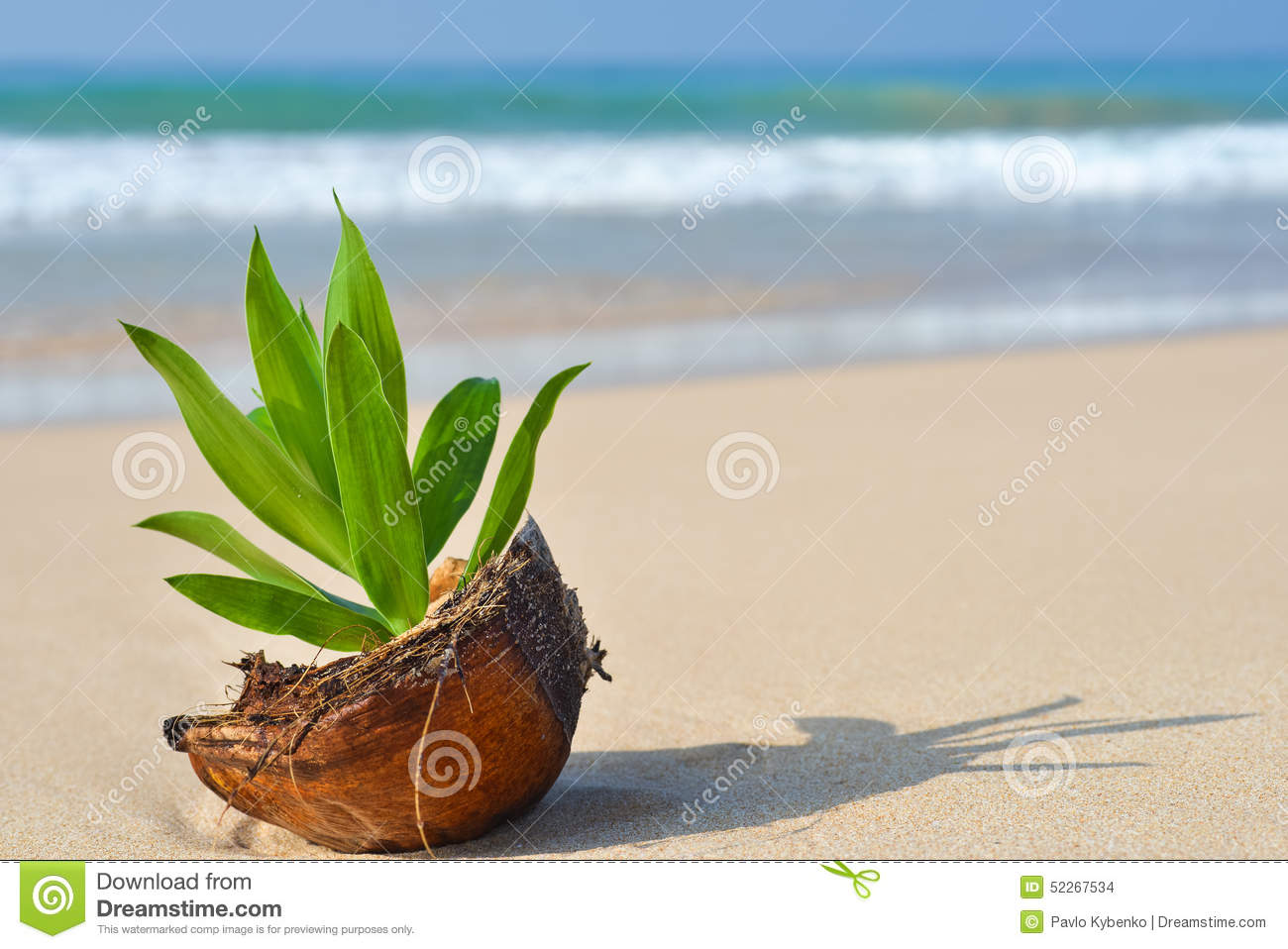 Coco On The Shore Stock Photo Image 52267534