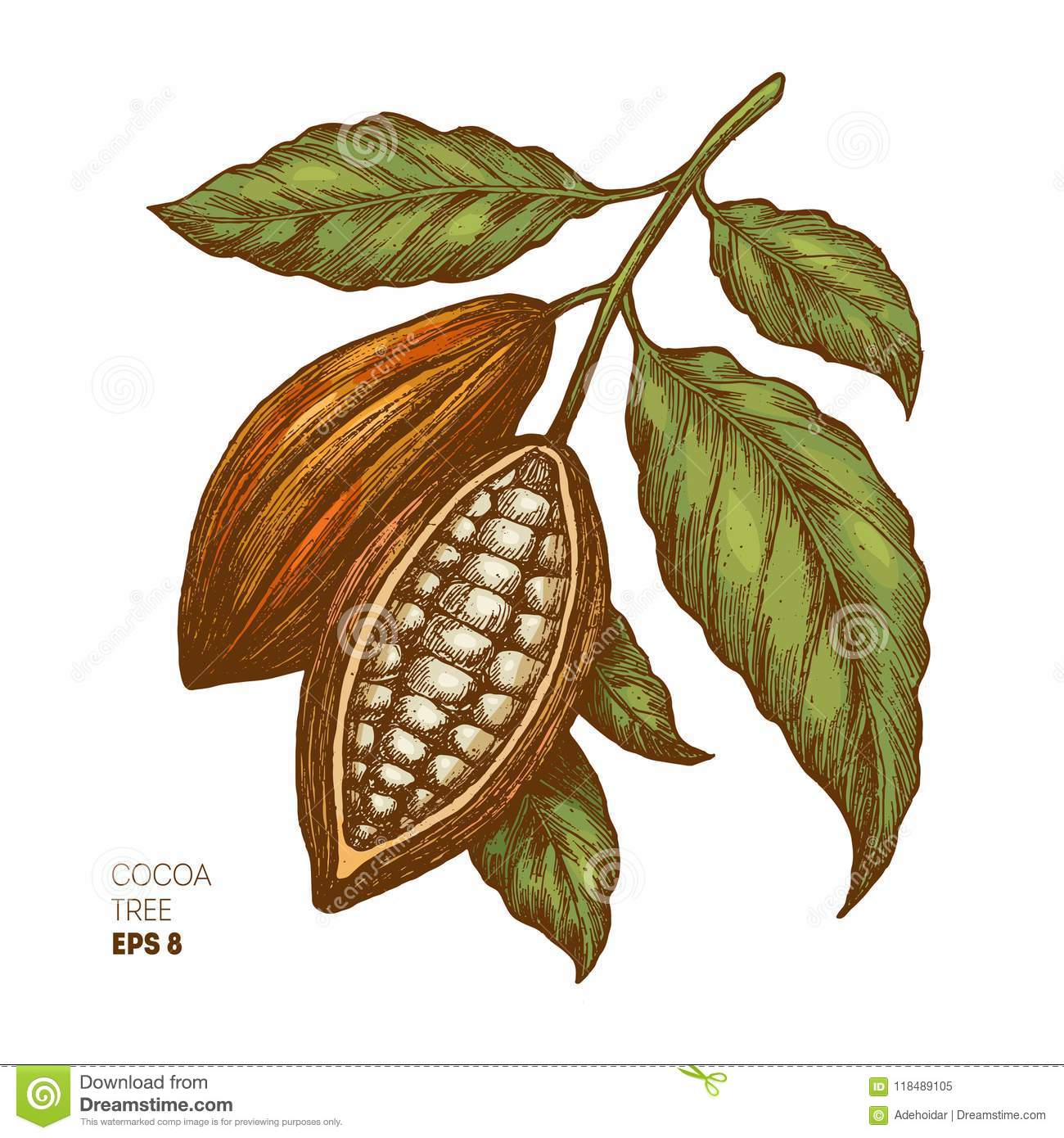 Cocoa Beans Illustration Engraved Style Illustration Chocolate Cocoa Beans Vector Illustration Stock Vector Illustration Of Jungle Beach 118489105