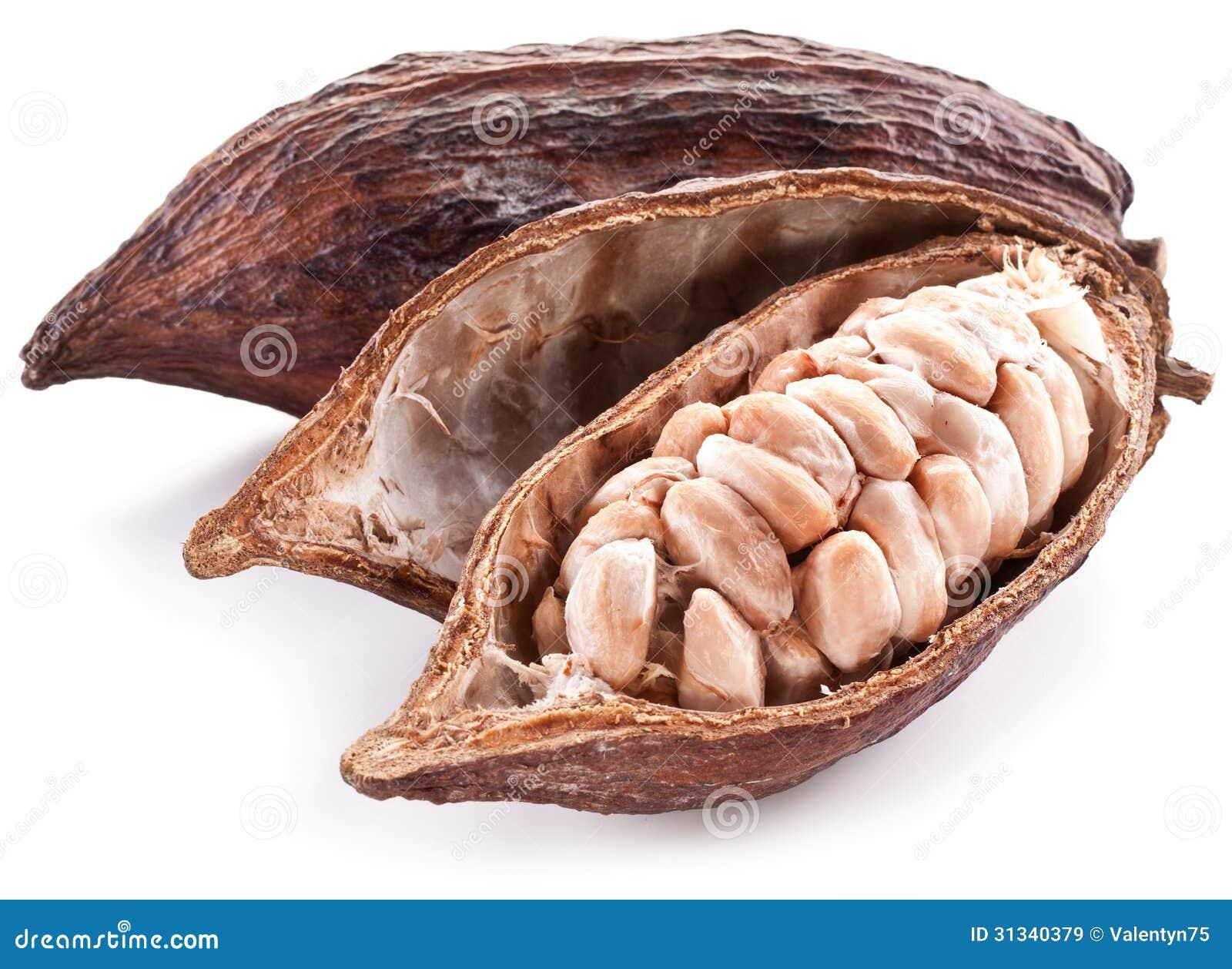 Cocoa Pod Stock Image Image Of Plant Slice Dried Fruit