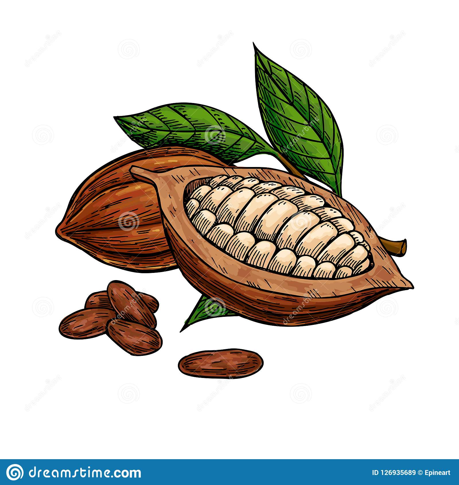 Hand Drawn Organic Food Label Set: Cocoa Vector Superfood Drawing Set . Organic Healthy Food