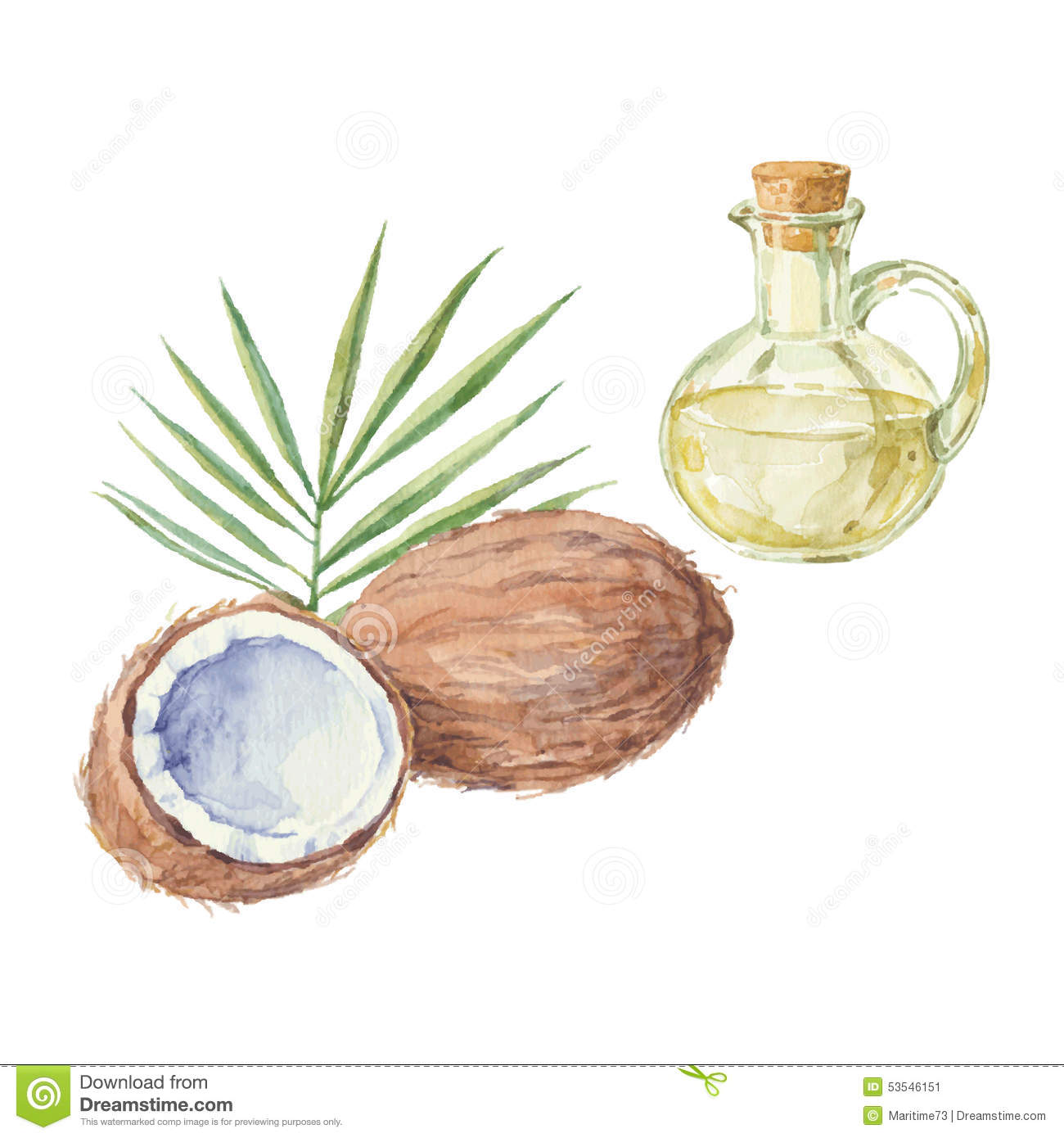 Coconut And A Bottle Of Oil Drawing By Watercolor Hand Stock Illustration Image 53546151