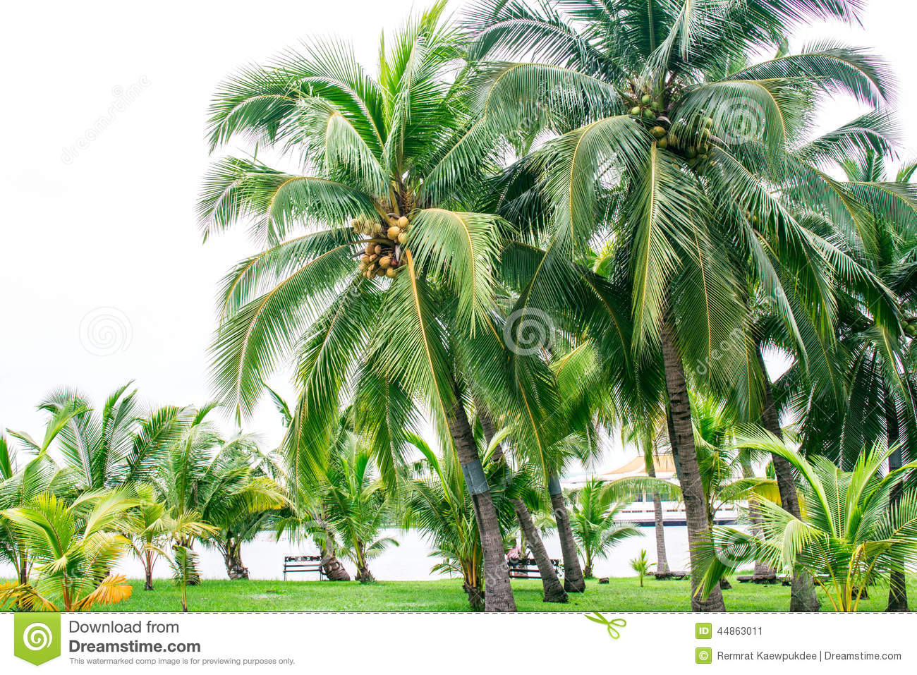 Coconut Garden Stock Photo Image 44863011