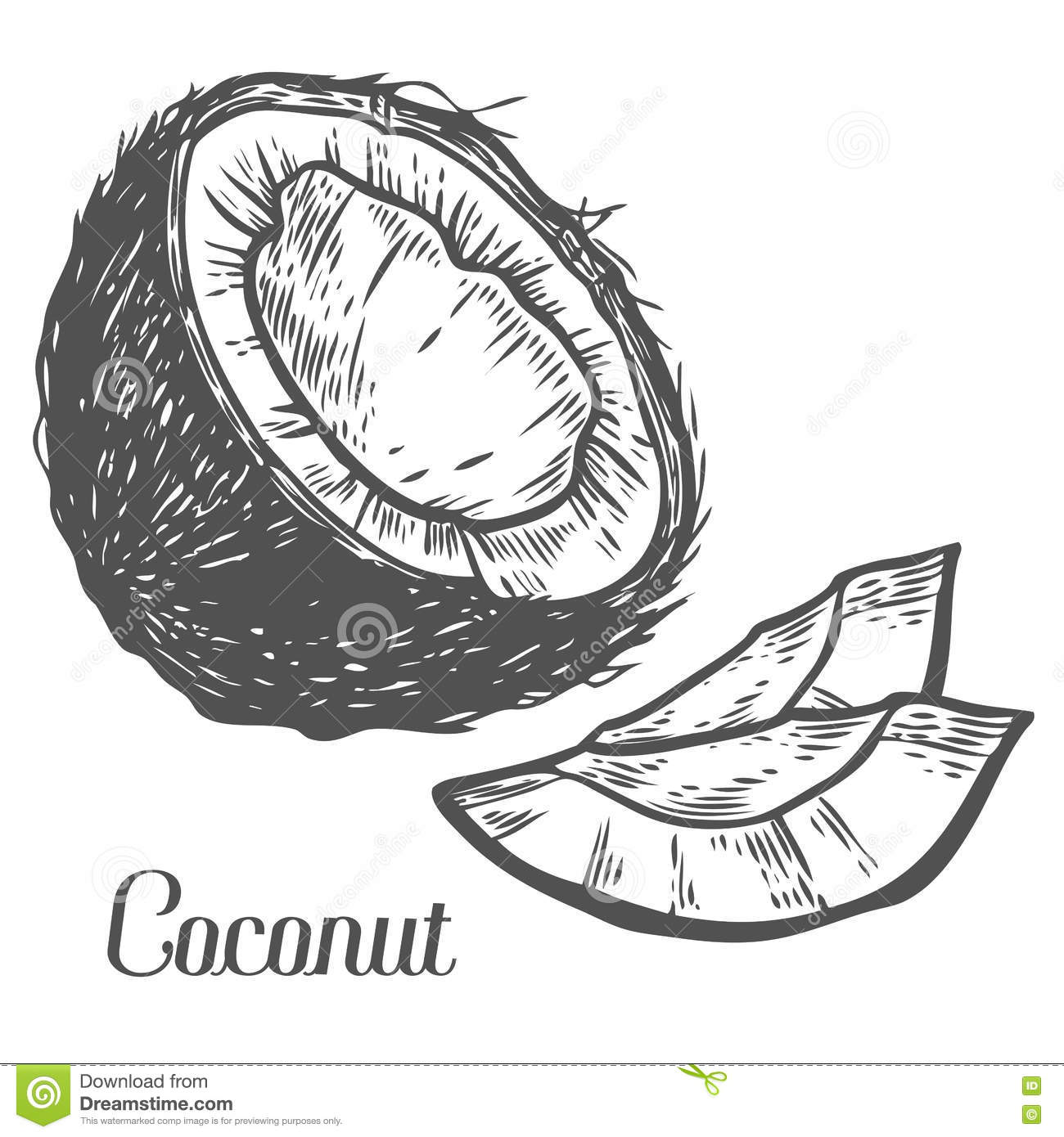 Coconut Drink Drawing 7390