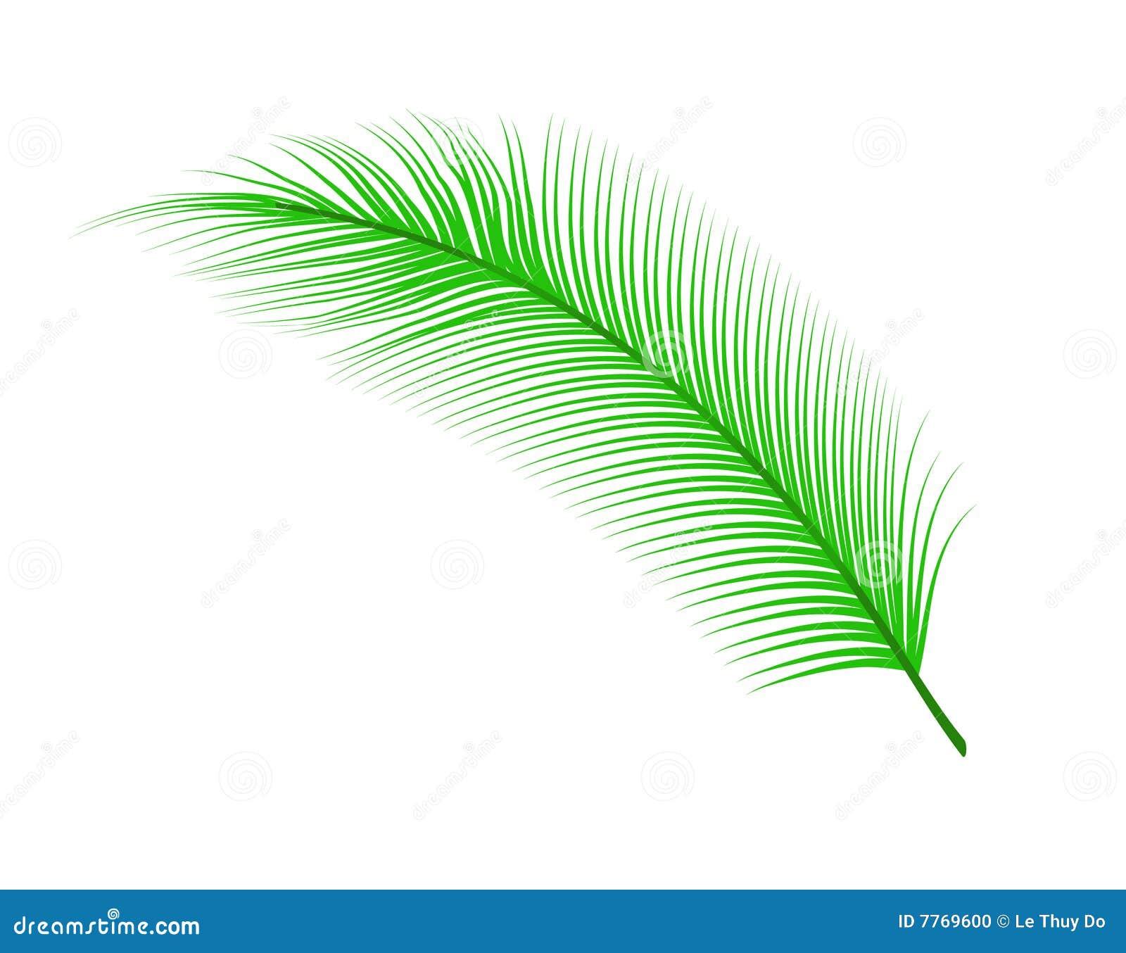 coconut leaf stock photo image 7769600 palm leaf clip art free palm leaf clip art no background
