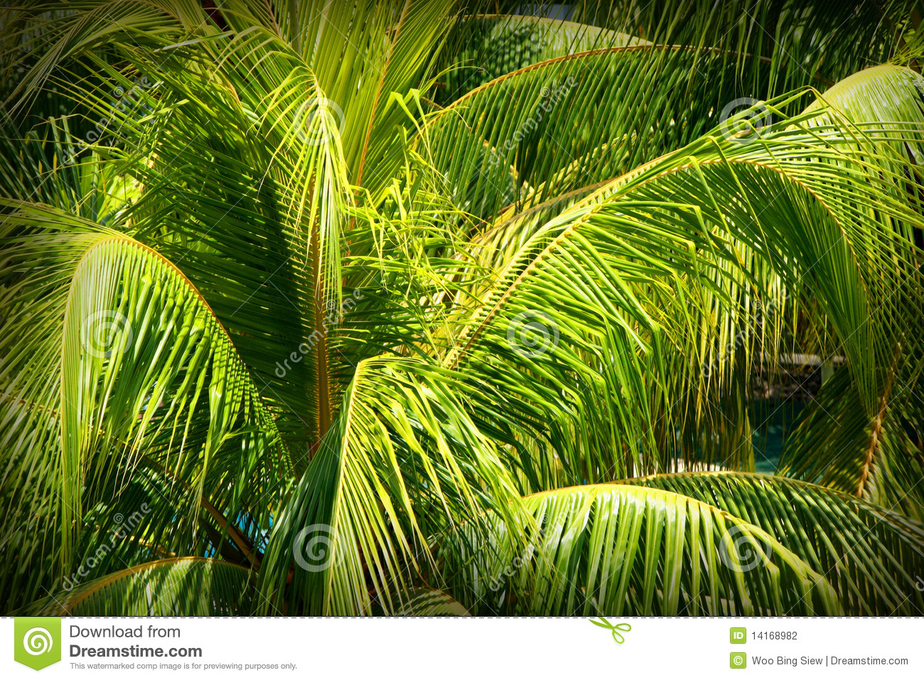 Coconut Leaves Stock Photography - Image: 14168982