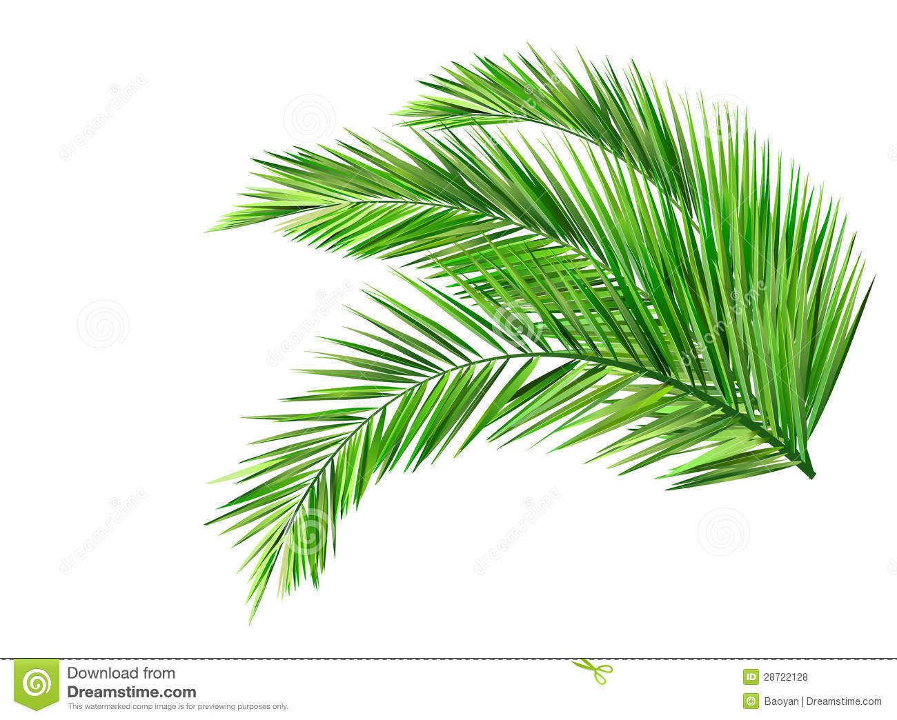 Coconut leaves stock vector. Illustration of tree, leaf ...