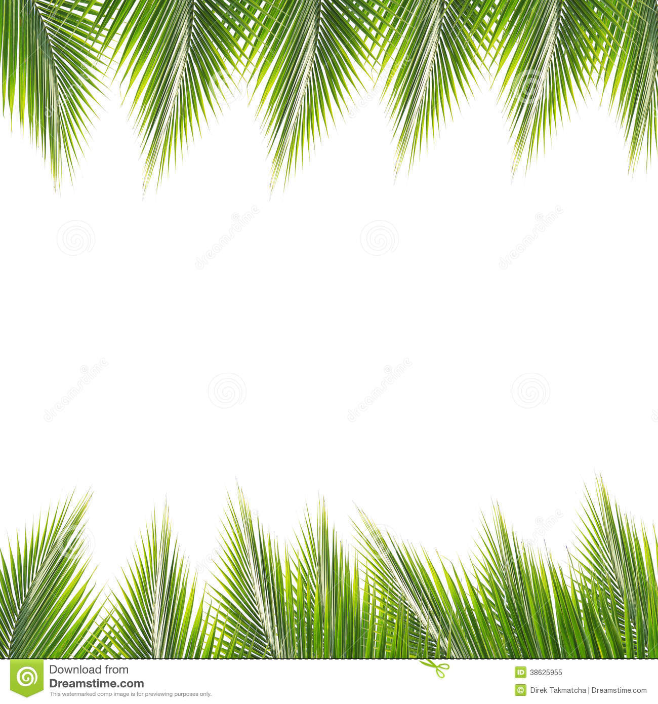 Coconut Leaves Frame Stock Image Image Of Droop Hang