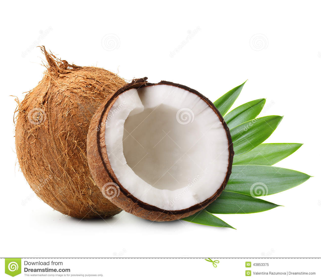 Coconut with palm leaves