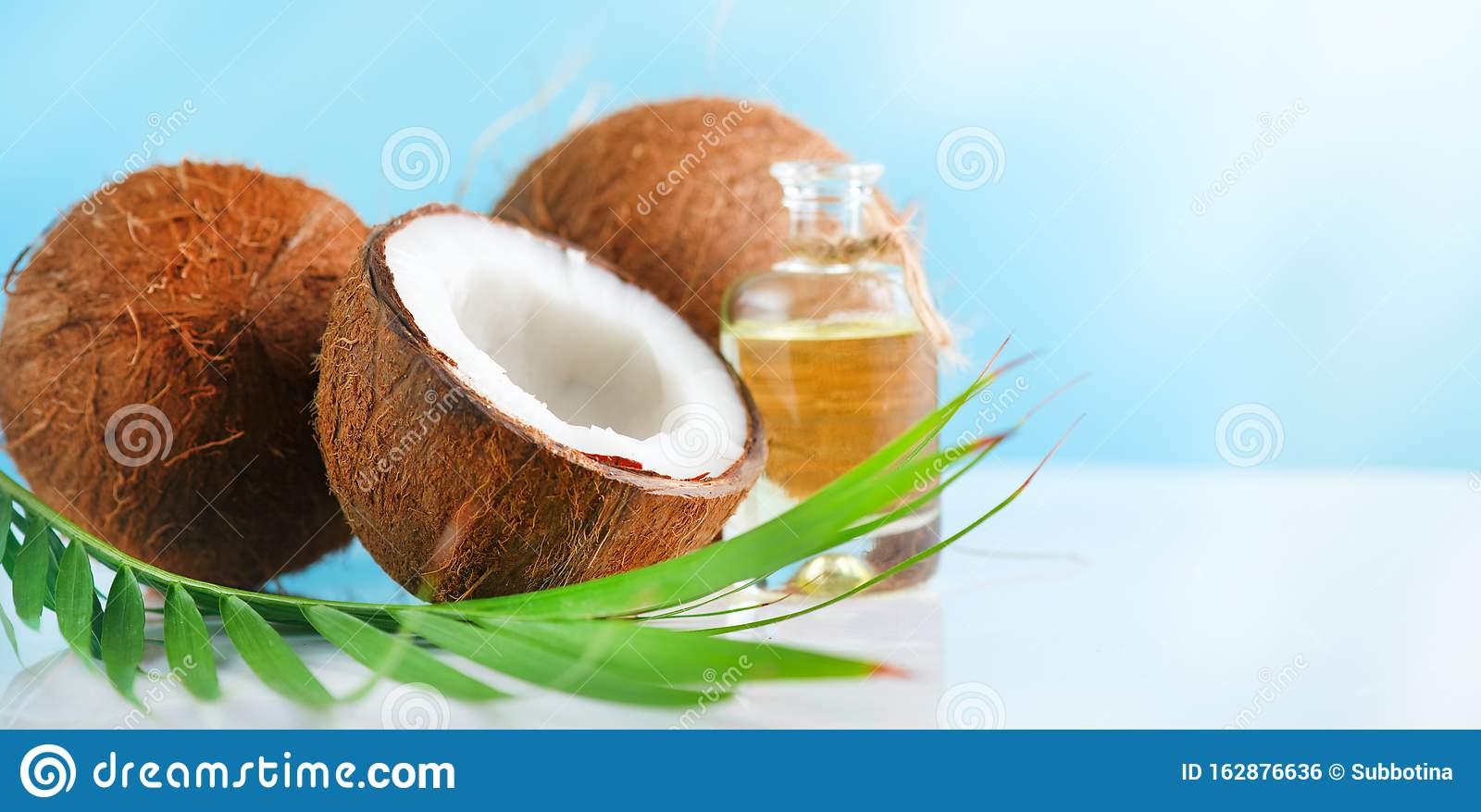 Coconut palm oil in a bottle with coconuts and green palm tree leaf on a blue and white background. Beauty treatments. Coco nut cl
