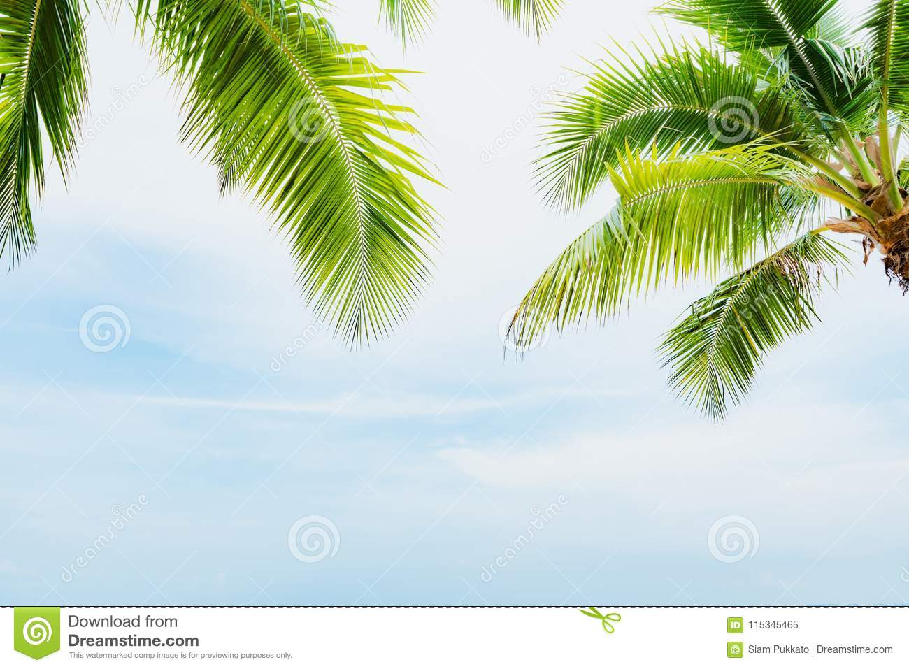 Coconut palm tree with blue sky for summer holiday and vacation