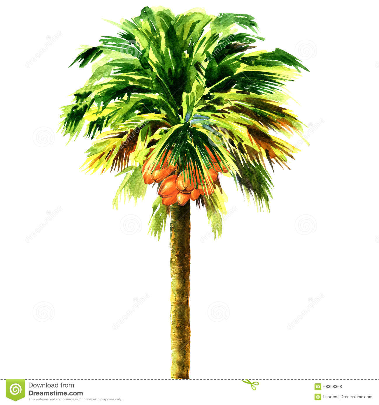 Coconut palm tree isolated, watercolor illustration