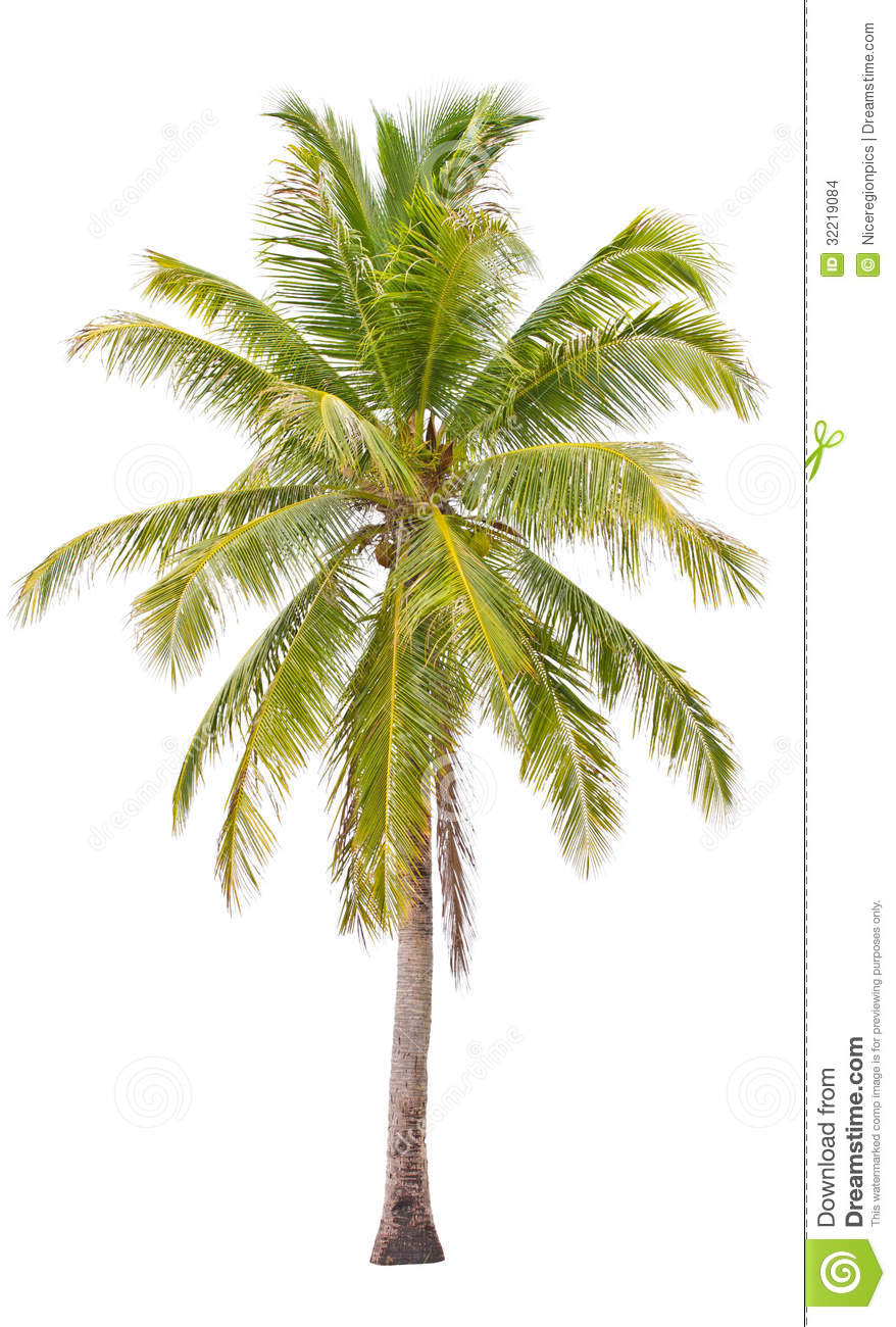 Coconut Palm Tree. Stock Images  Image: 32219084