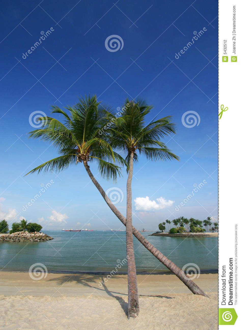 Coconut Palm Trees On Beach Stock Photo