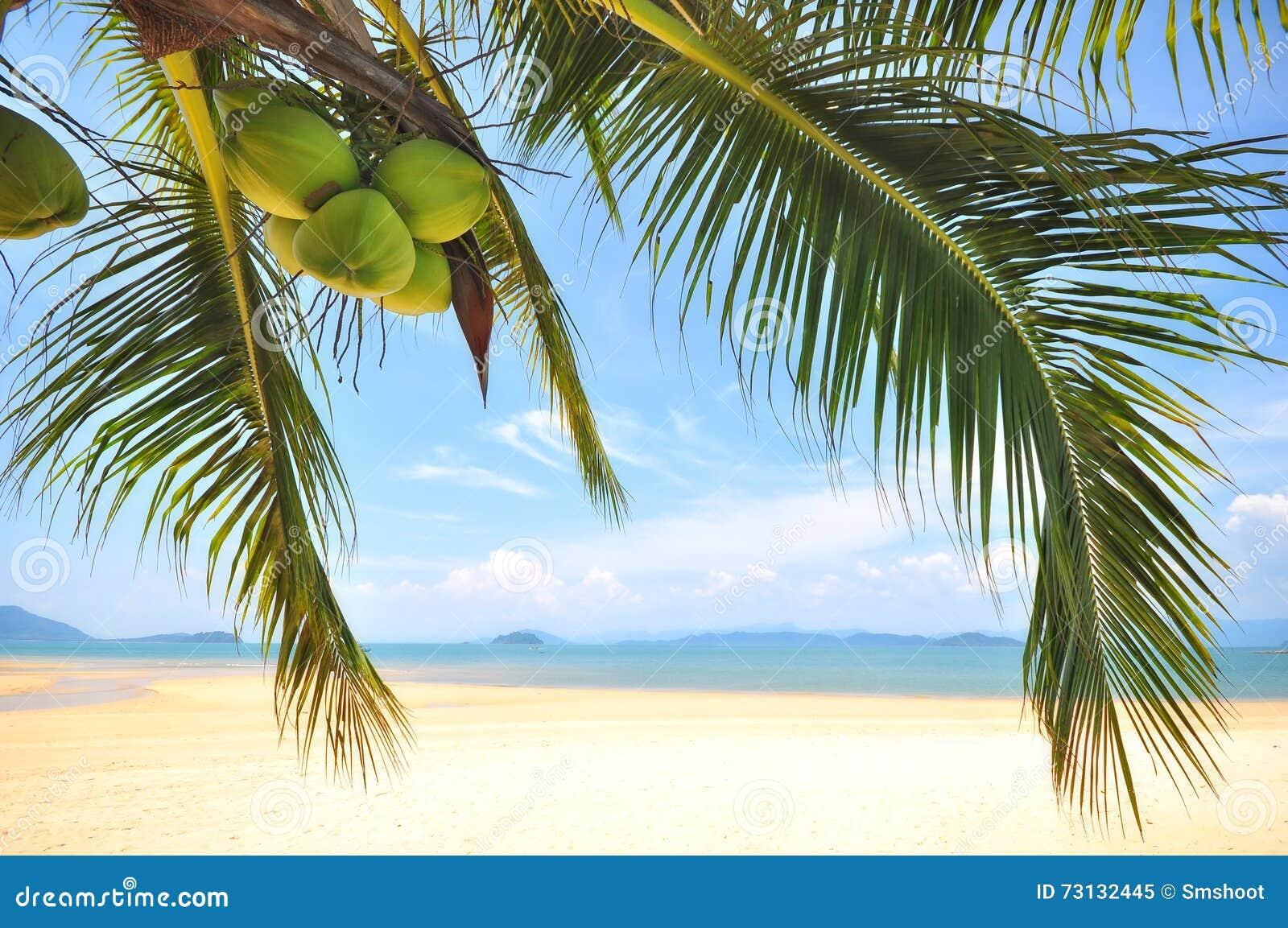 Coconuts Palm Beach Resort