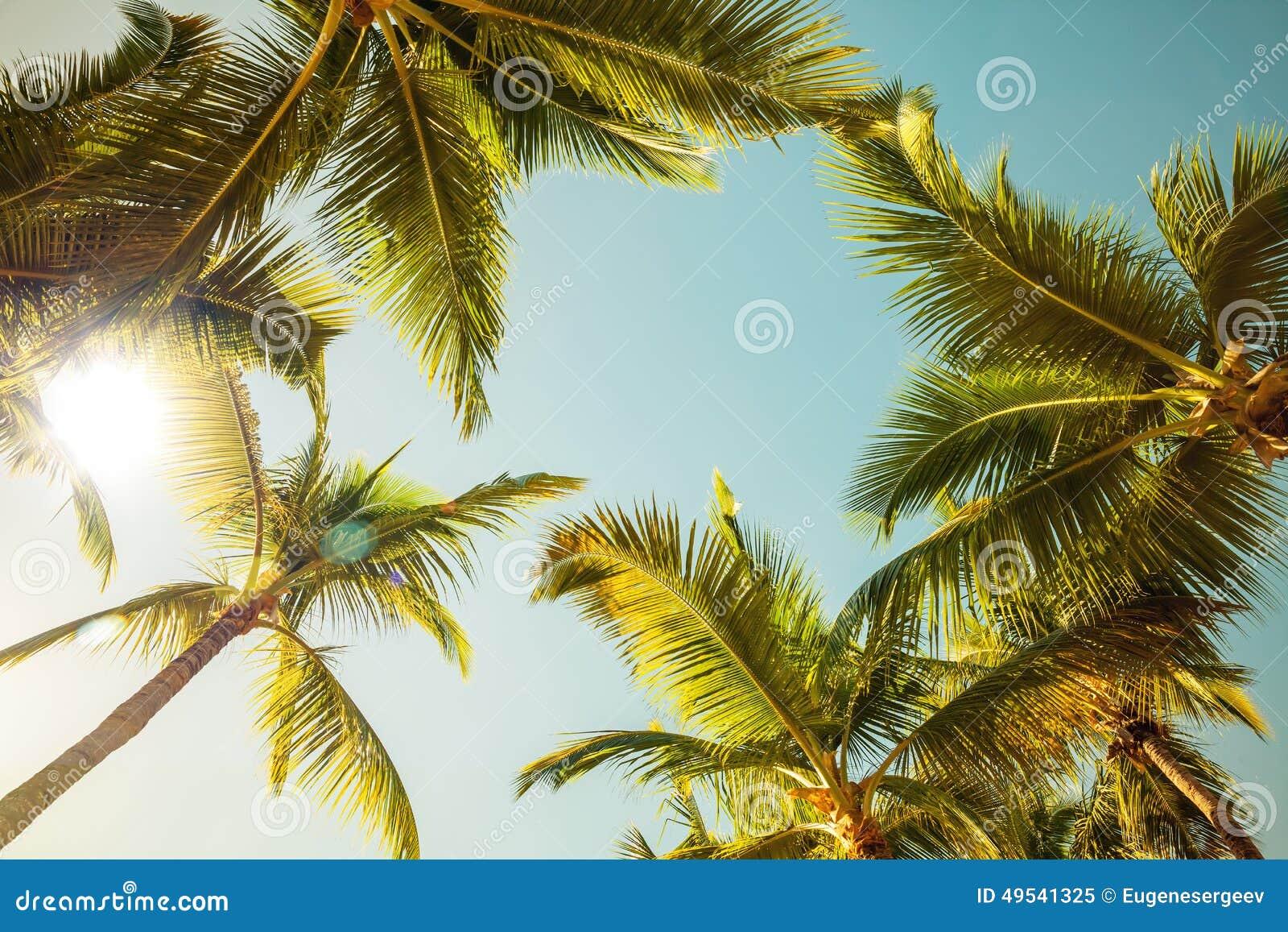 Coconut sun
