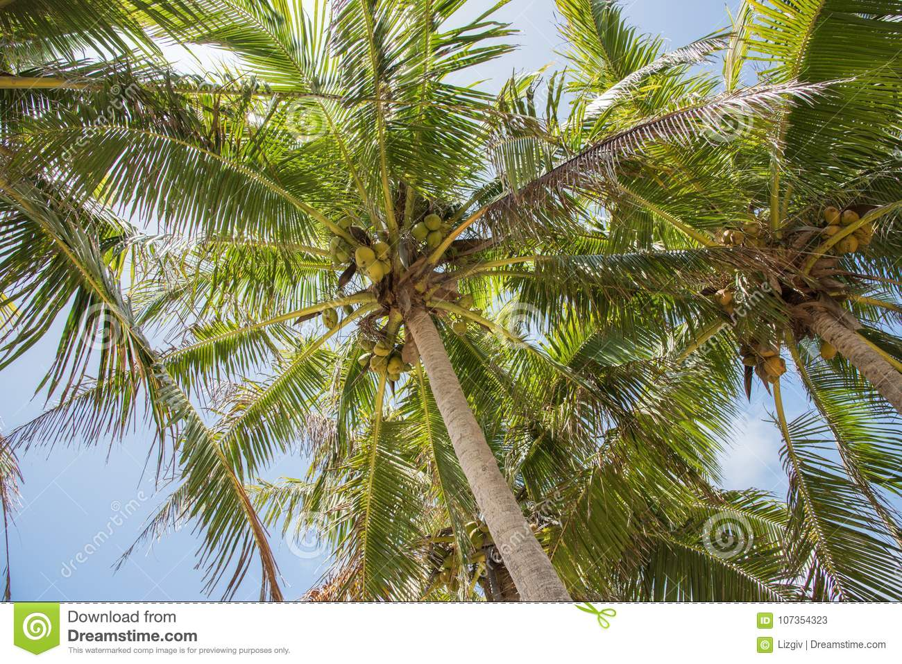 Coconut Palms: Mystery Islands
