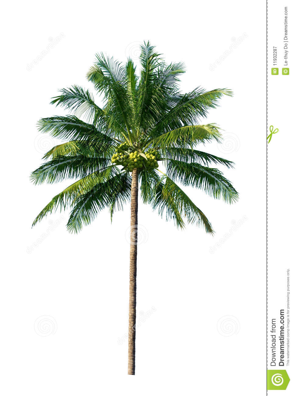 Coconut Tree Royalty Free Stock Photography - Image: 11932287