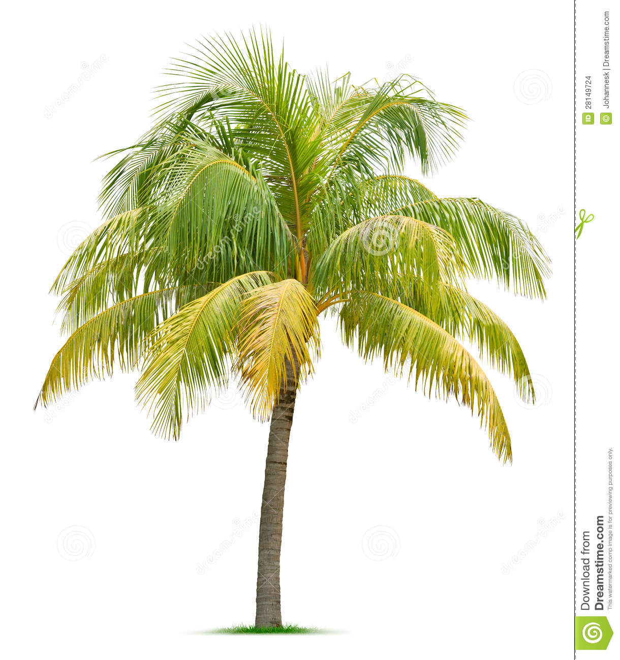 coconut tree stock images image 28149724 clip art palm trees sunny clip art palm trees sunny