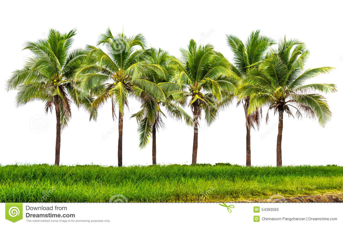 Line up of coconut tree and grassland isolated on white background.