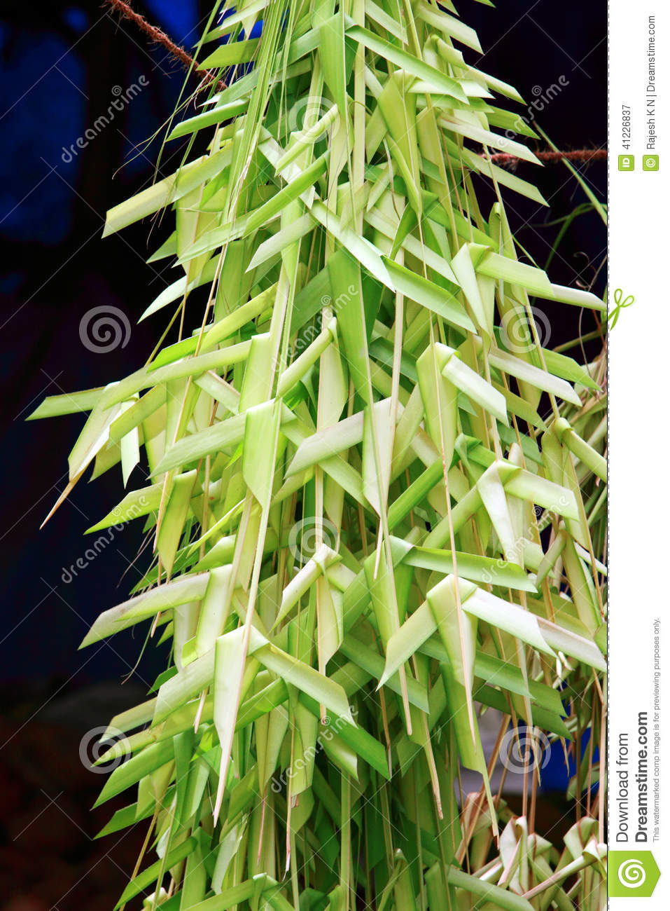 Coconut Tree Leaf Stock Photo Image 41226837