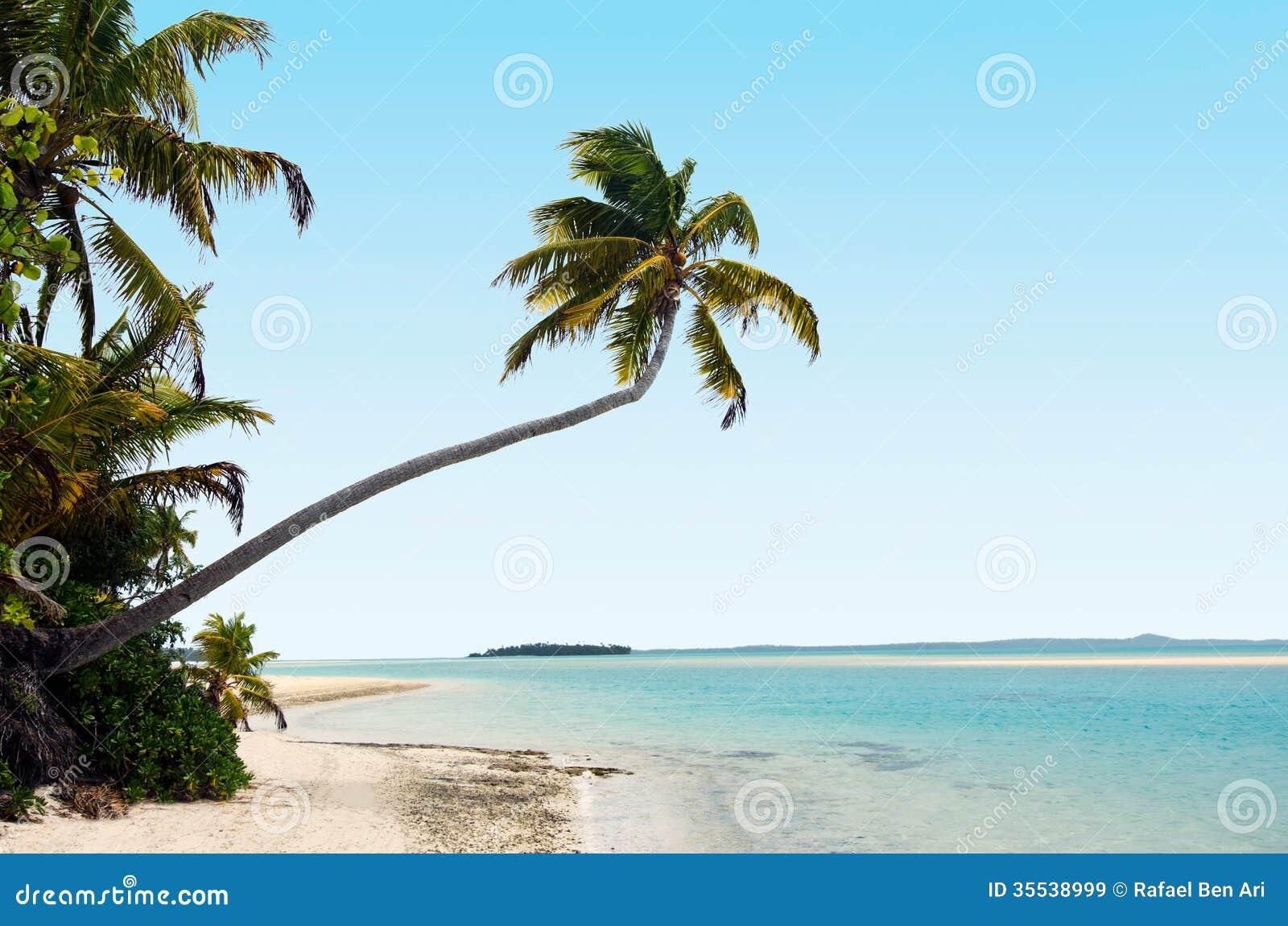 Lagoon Tropical Island: Coconut Trees On Deserted Tropical Island Stock Image