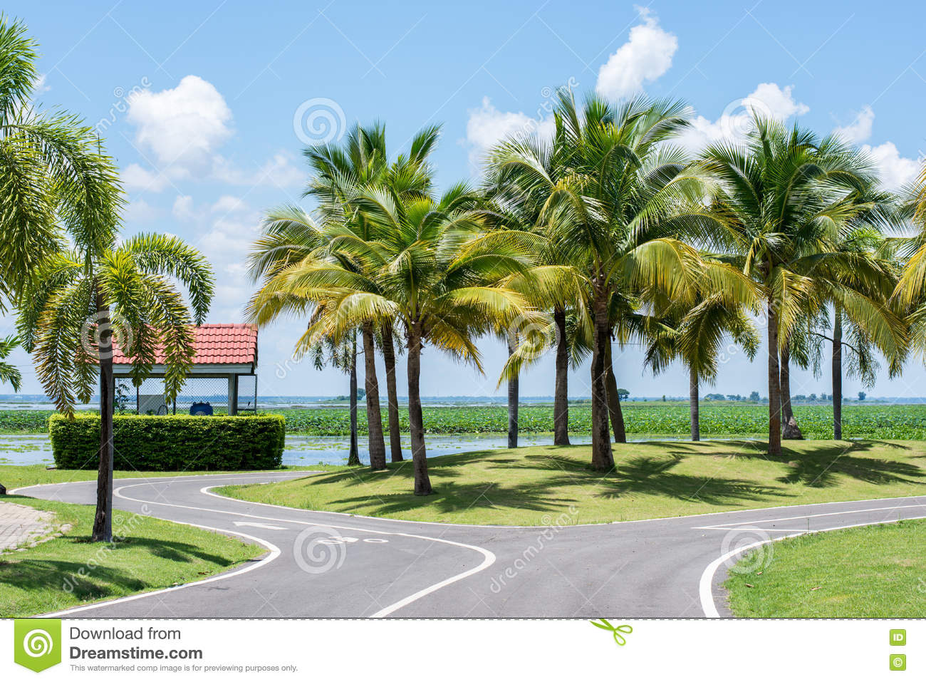 Coconut trees in the park stock photo image of park for Small trees suitable for small gardens