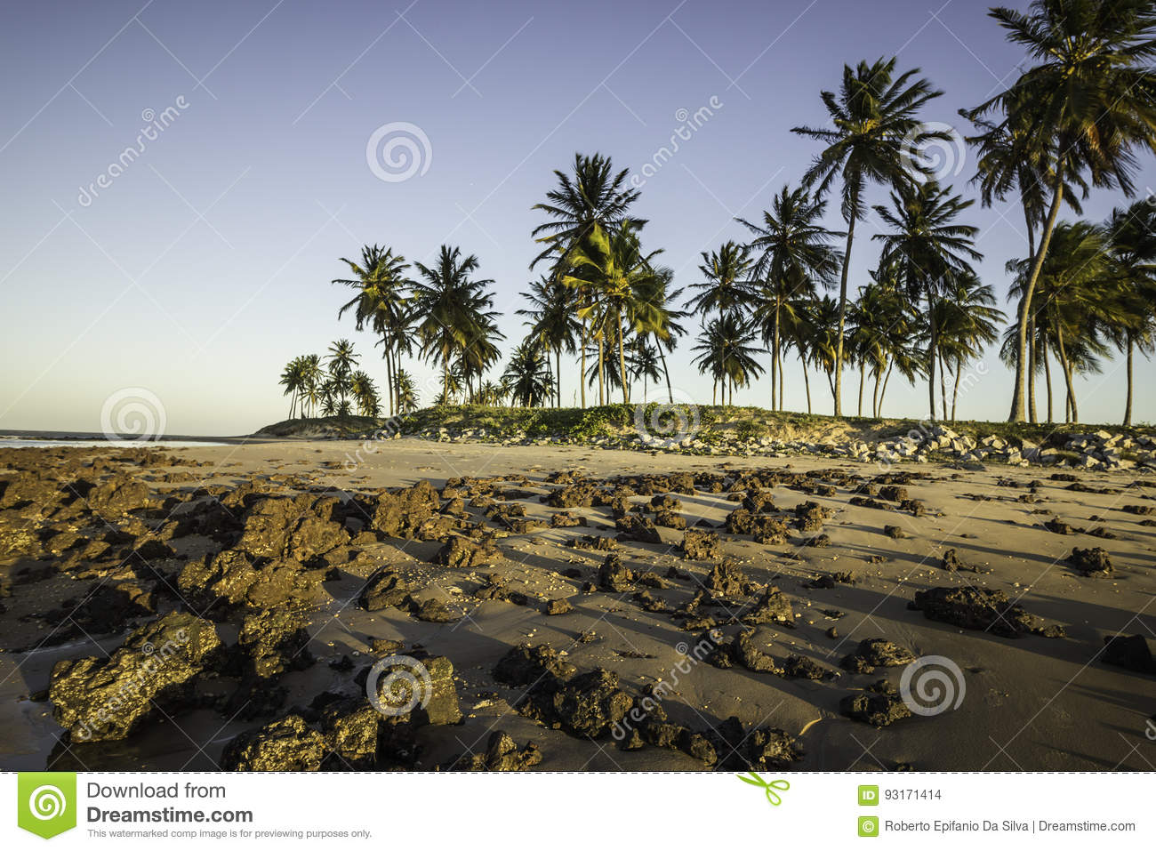 Coconuts on the beach at sunset - North coast of Potiguar