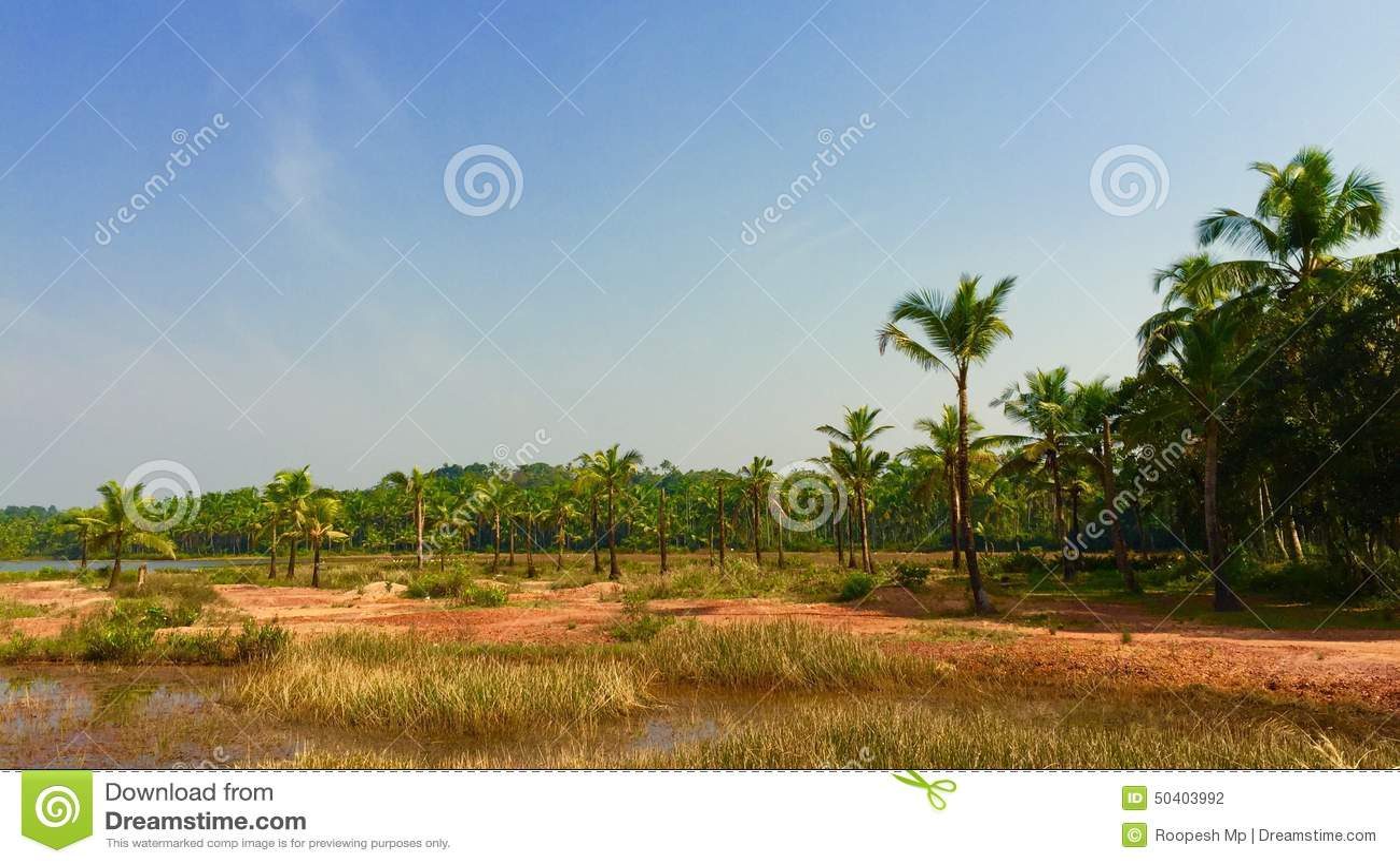 Coconuts Landscape Stock Photo - Image: 50403992