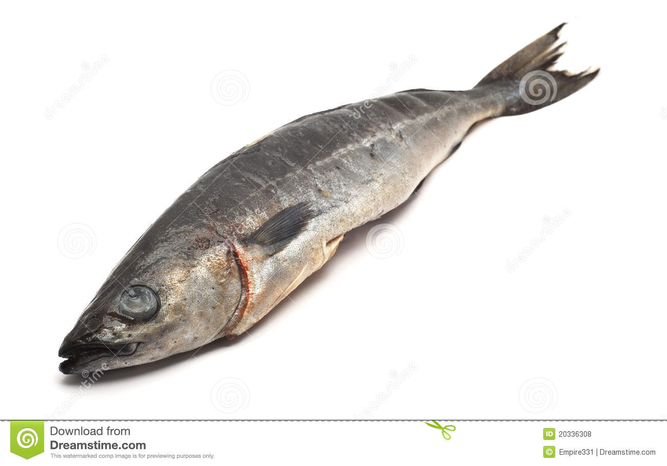 Cod fish stock photo image of dead seafood fishing for What is cod fish
