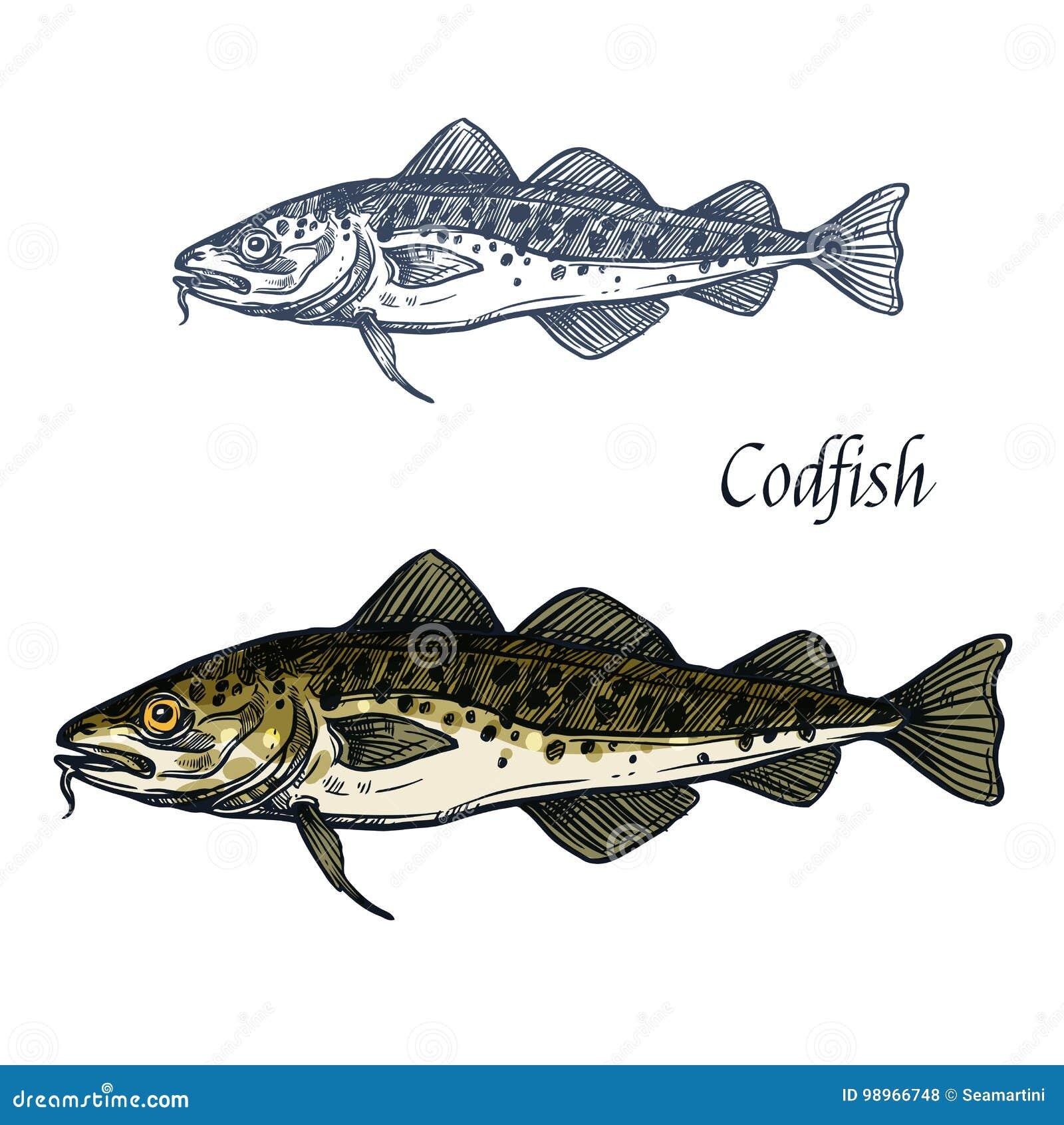 Cod fish vector sketch icon