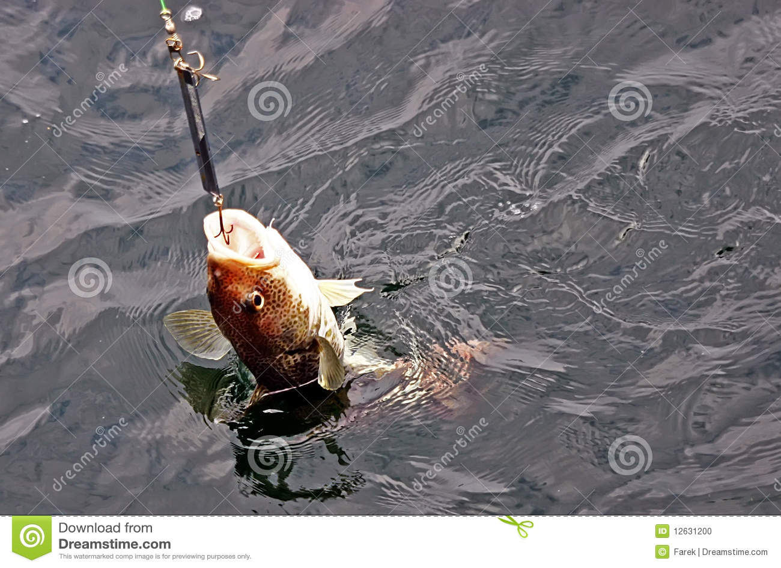 Cod hooked stock photo image 12631200 for Cod fish mercury