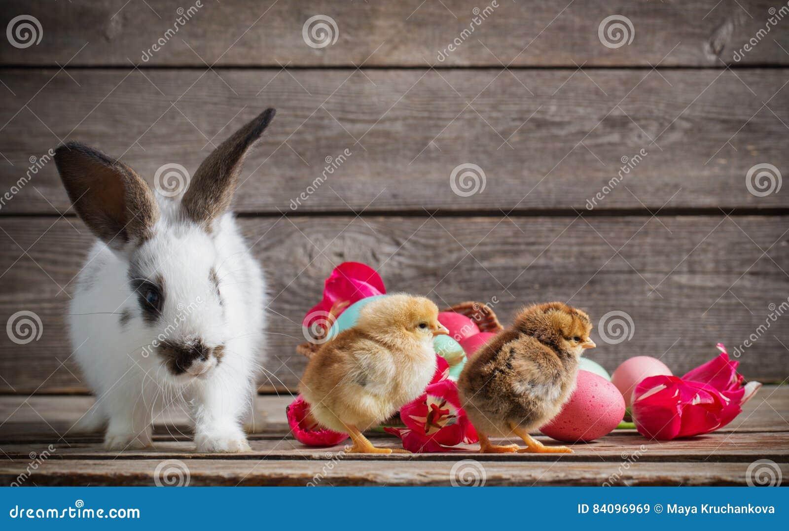 Coelhinho da Páscoa e galinhas