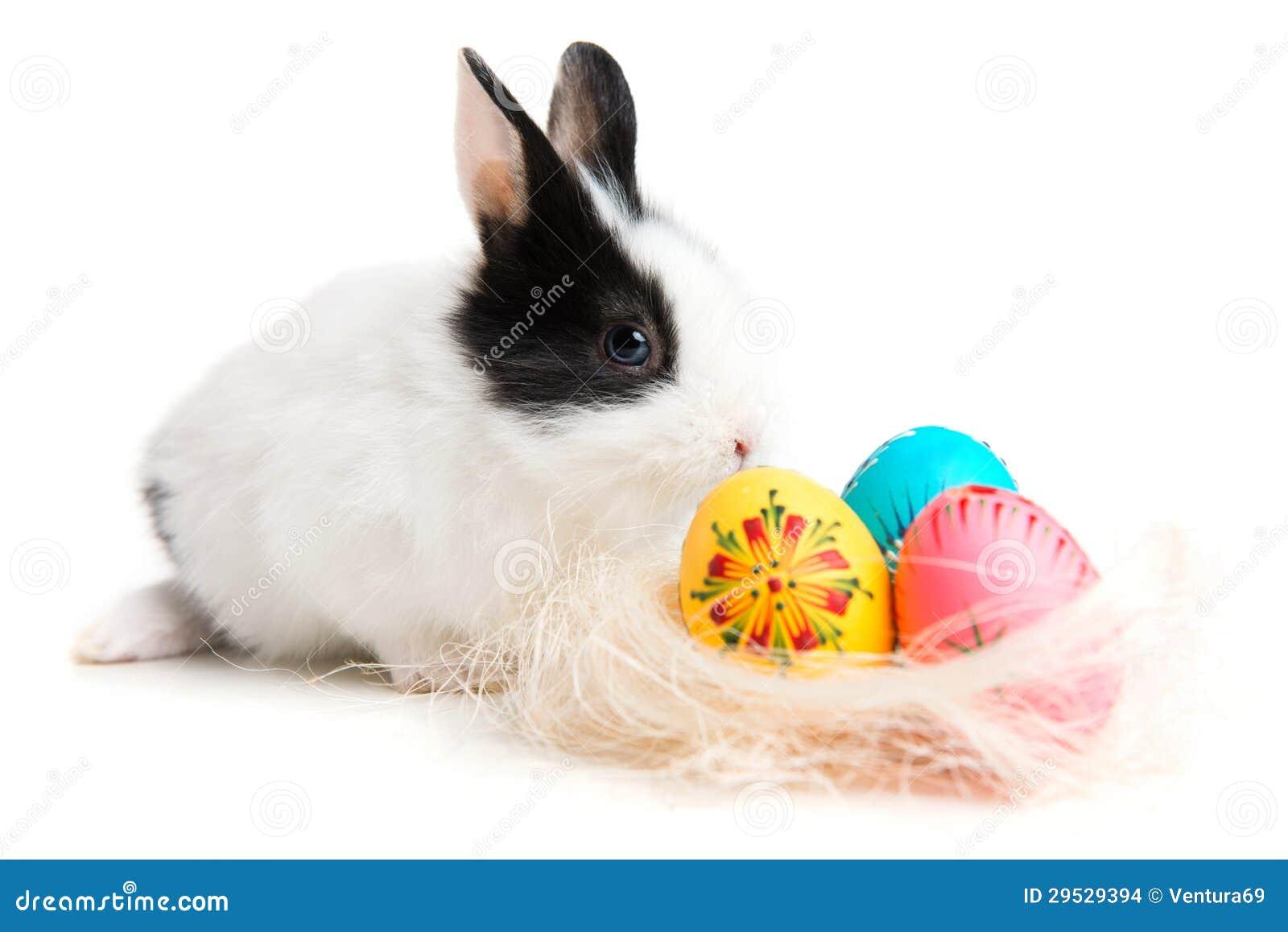 Coelhinho da Páscoa e ovos no ninho