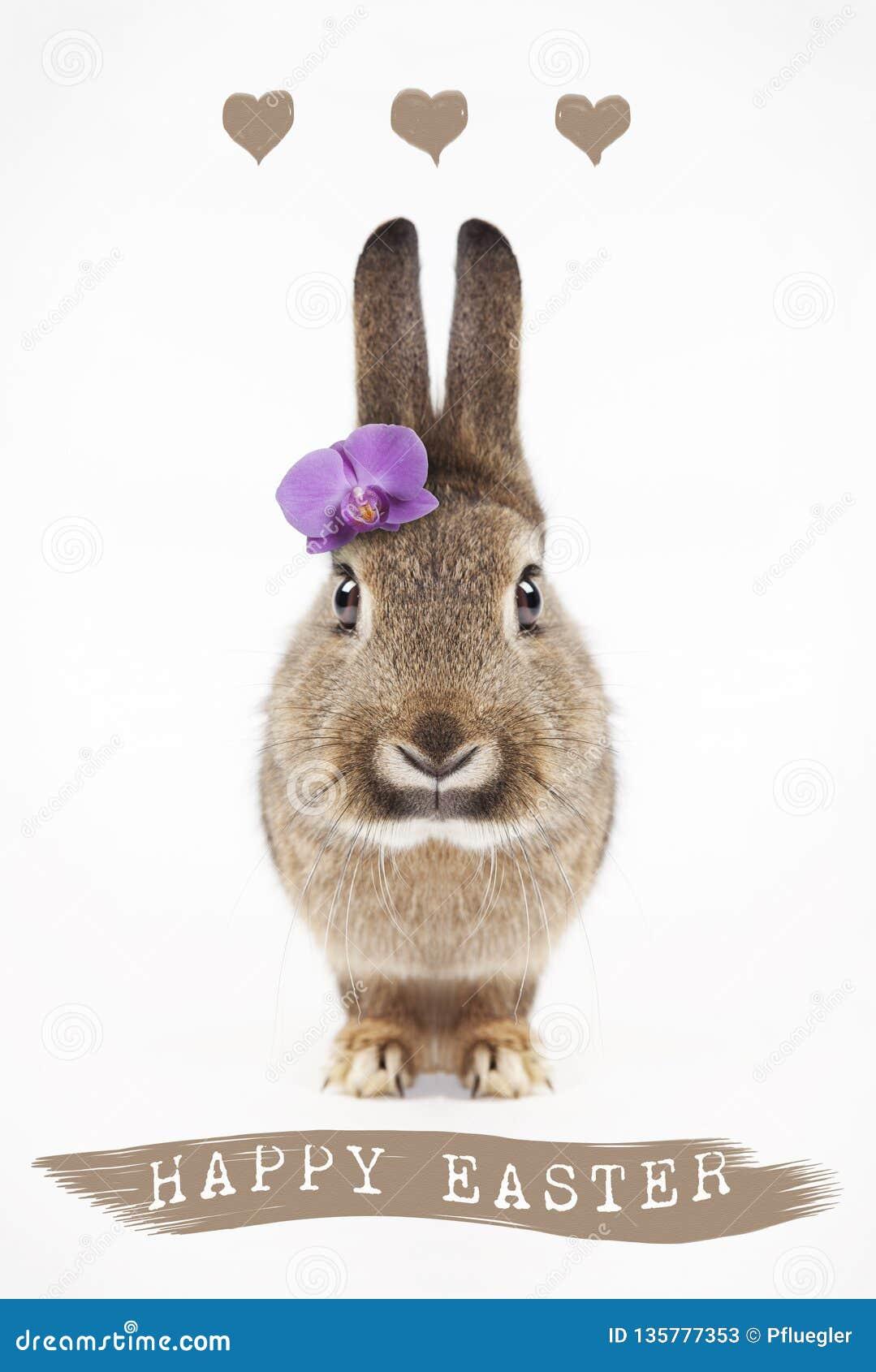 Coelhinho da Páscoa feliz com flor